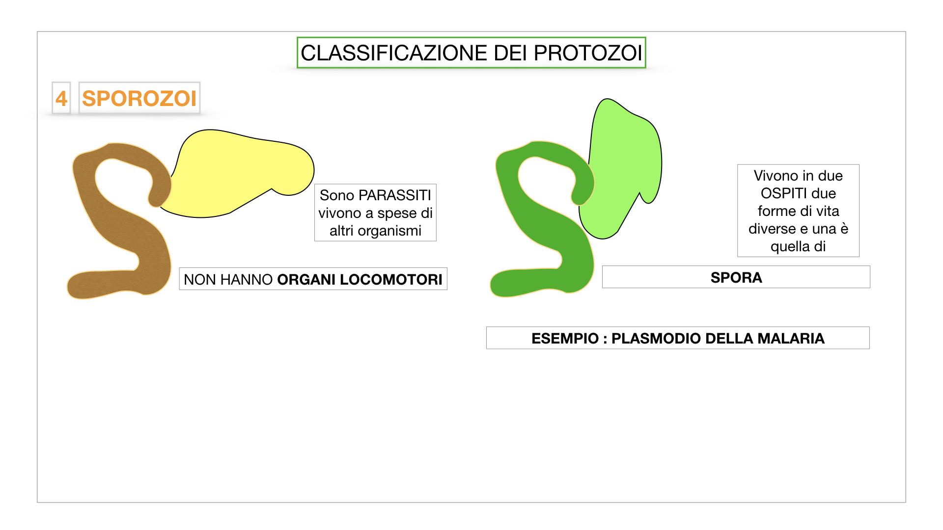 6. PROTOZOI_classificazione_SIMULAZIONE.050