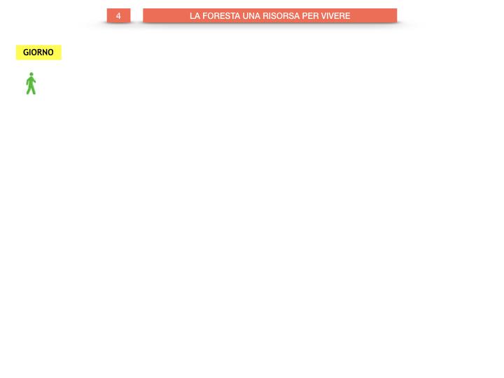 6.STORIA_IL MONDO DELLE FORESTE_SIMULAZIONE.034