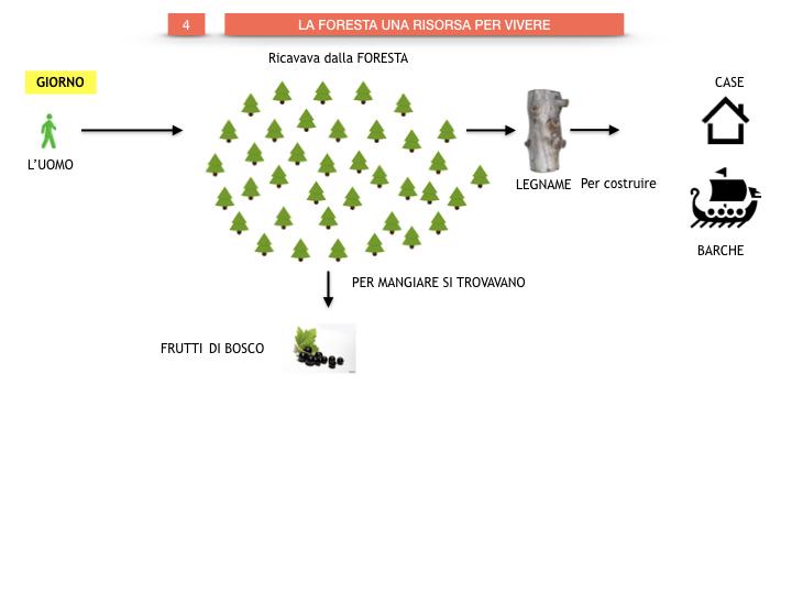 6.STORIA_IL MONDO DELLE FORESTE_SIMULAZIONE.040