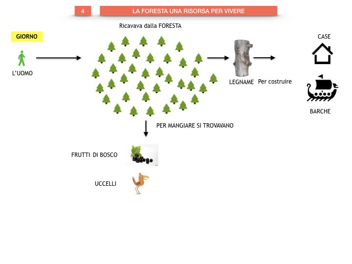 6.STORIA_IL MONDO DELLE FORESTE_SIMULAZIONE.041