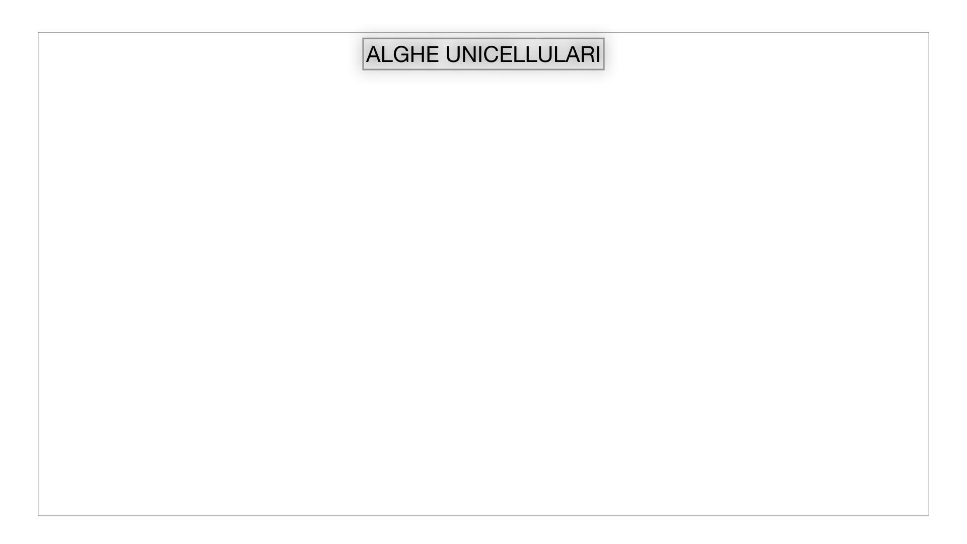 8. alghe uni_pluri_cellulari_SIMULAZIONE.001