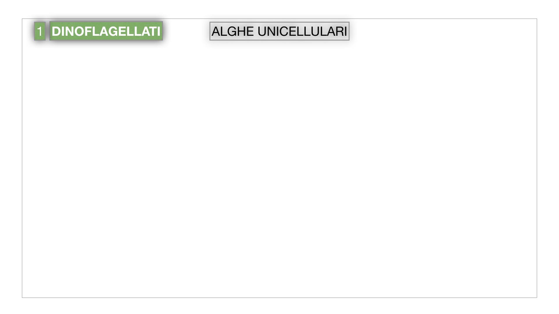 8. alghe uni_pluri_cellulari_SIMULAZIONE.002