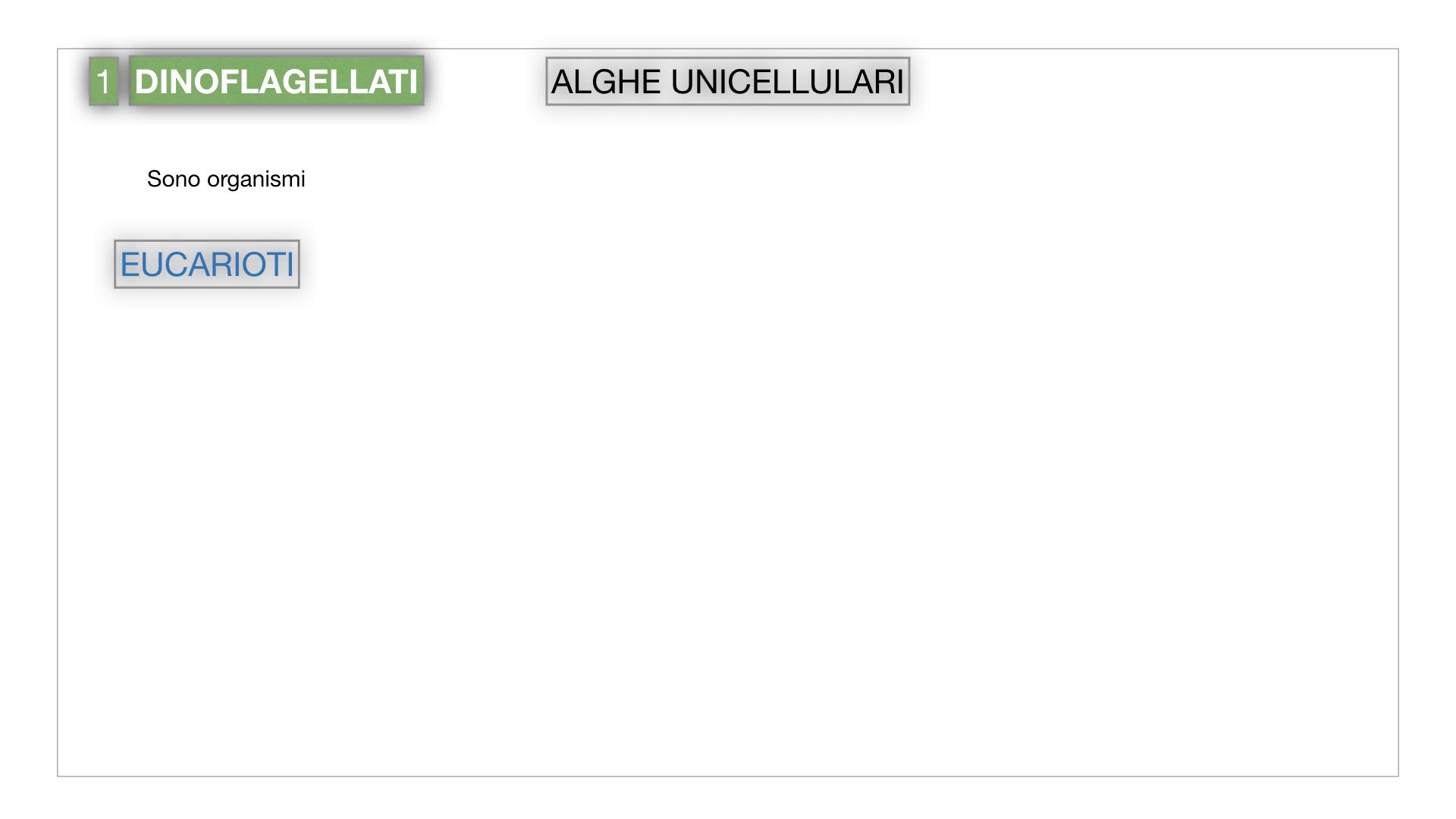 8. alghe uni_pluri_cellulari_SIMULAZIONE.003