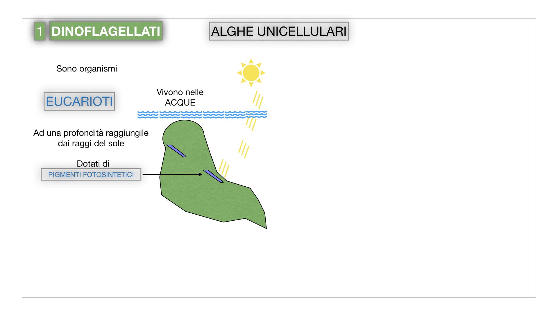 8. alghe uni_pluri_cellulari_SIMULAZIONE.006