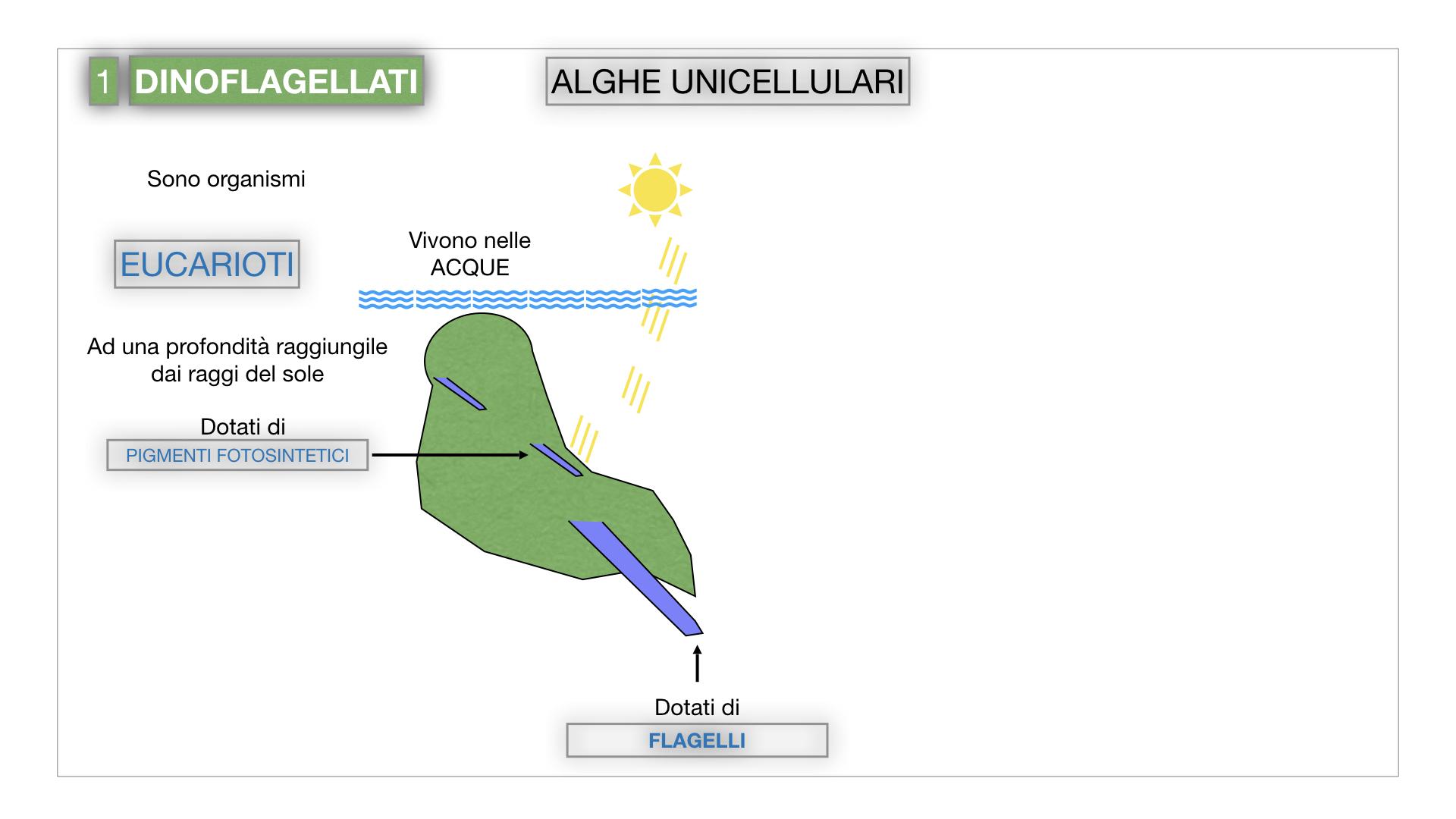 8. alghe uni_pluri_cellulari_SIMULAZIONE.007