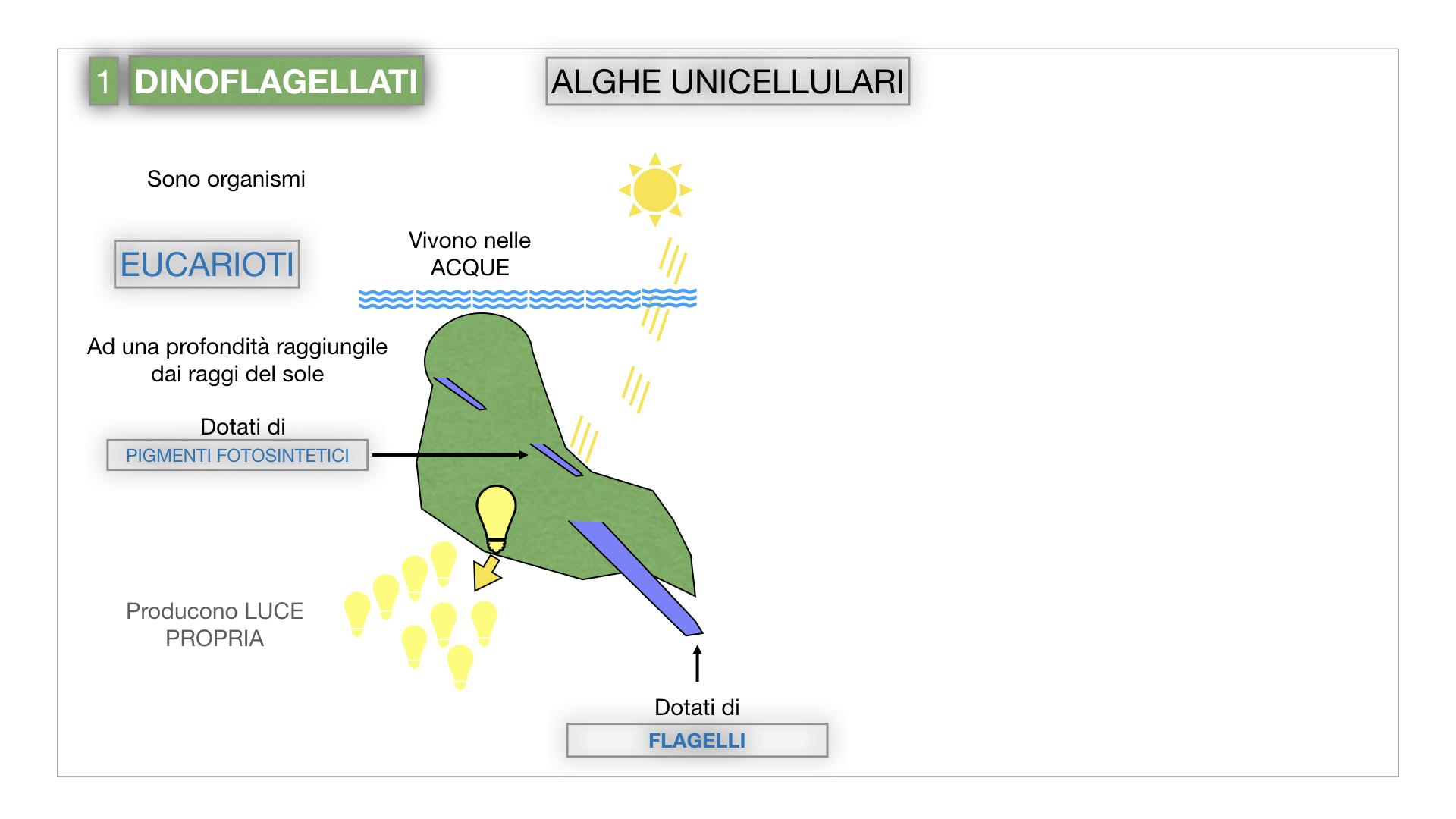 8. alghe uni_pluri_cellulari_SIMULAZIONE.008