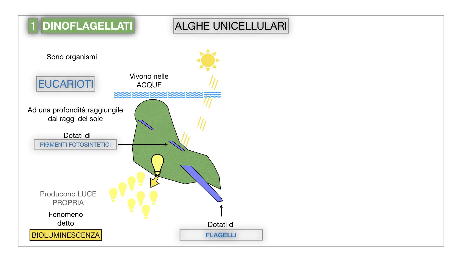 8. alghe uni_pluri_cellulari_SIMULAZIONE.009