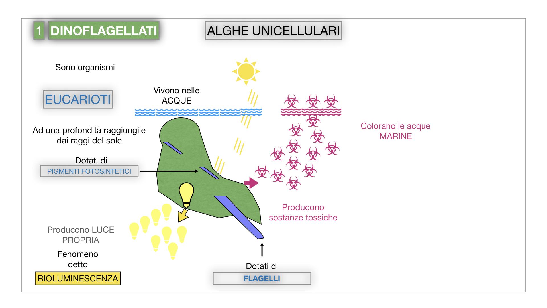 8. alghe uni_pluri_cellulari_SIMULAZIONE.011