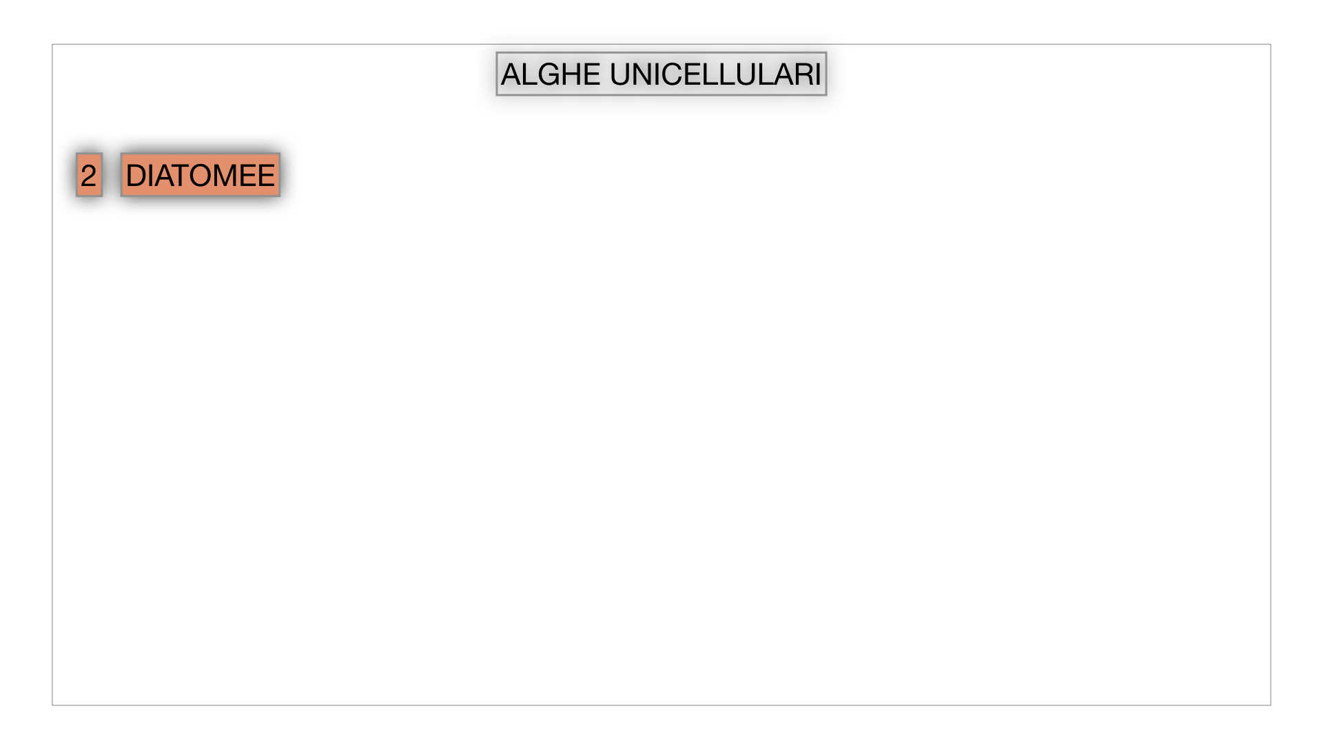 8. alghe uni_pluri_cellulari_SIMULAZIONE.014