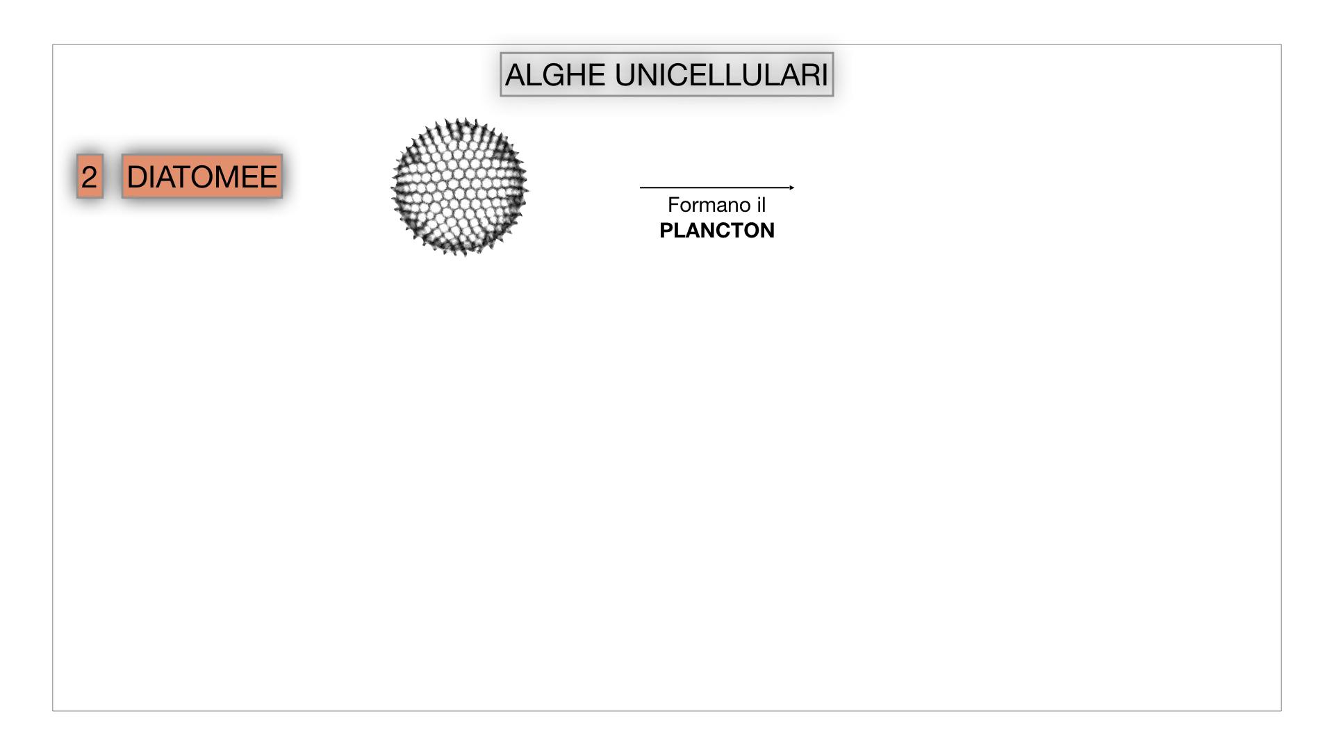 8. alghe uni_pluri_cellulari_SIMULAZIONE.015