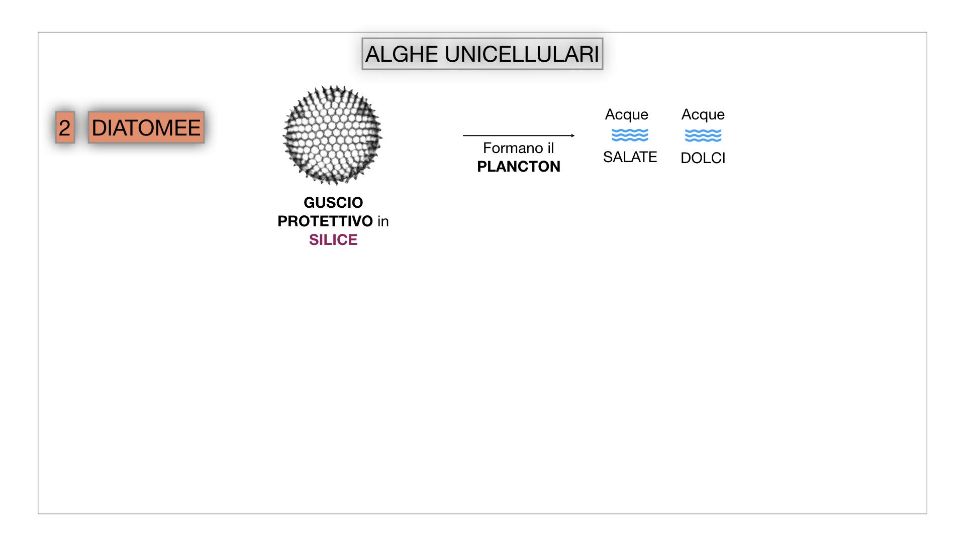 8. alghe uni_pluri_cellulari_SIMULAZIONE.017