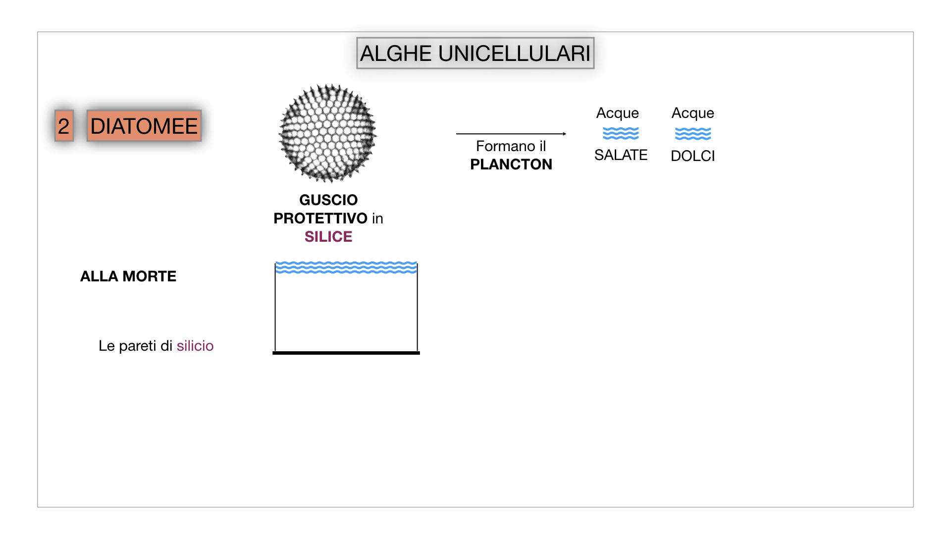 8. alghe uni_pluri_cellulari_SIMULAZIONE.018