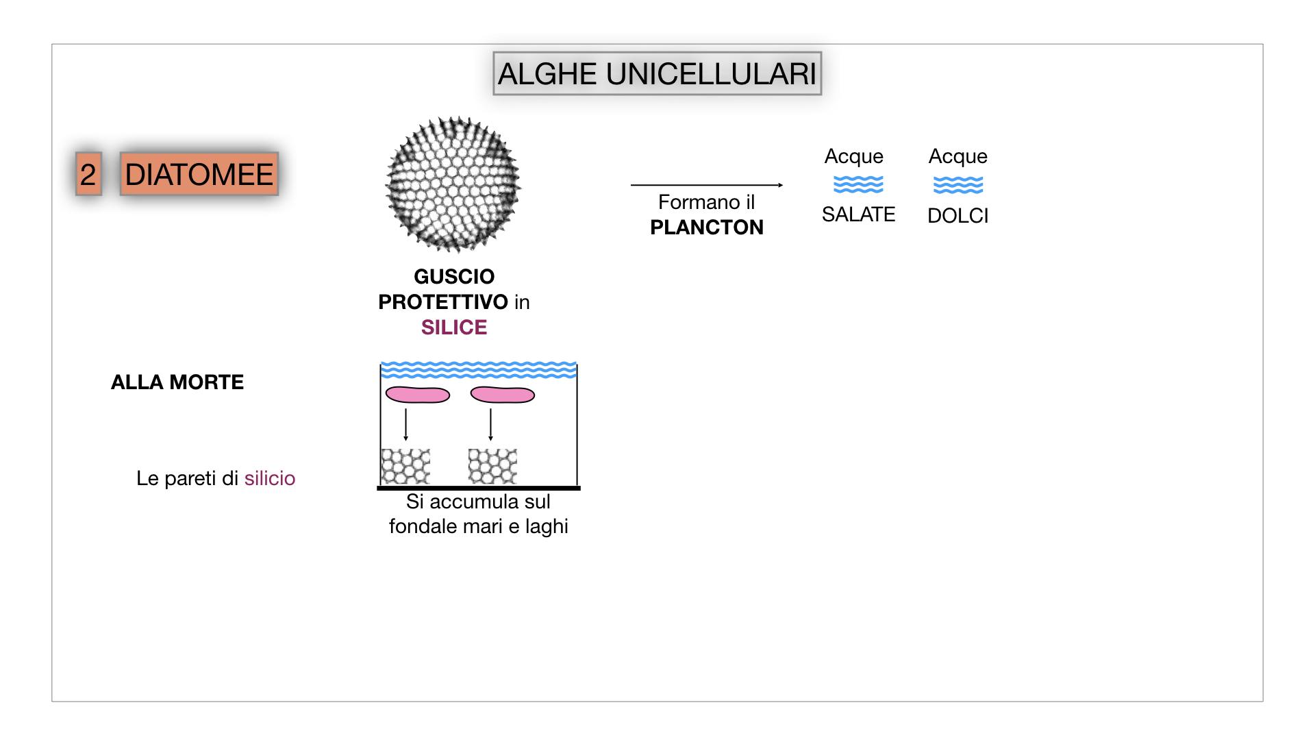 8. alghe uni_pluri_cellulari_SIMULAZIONE.019