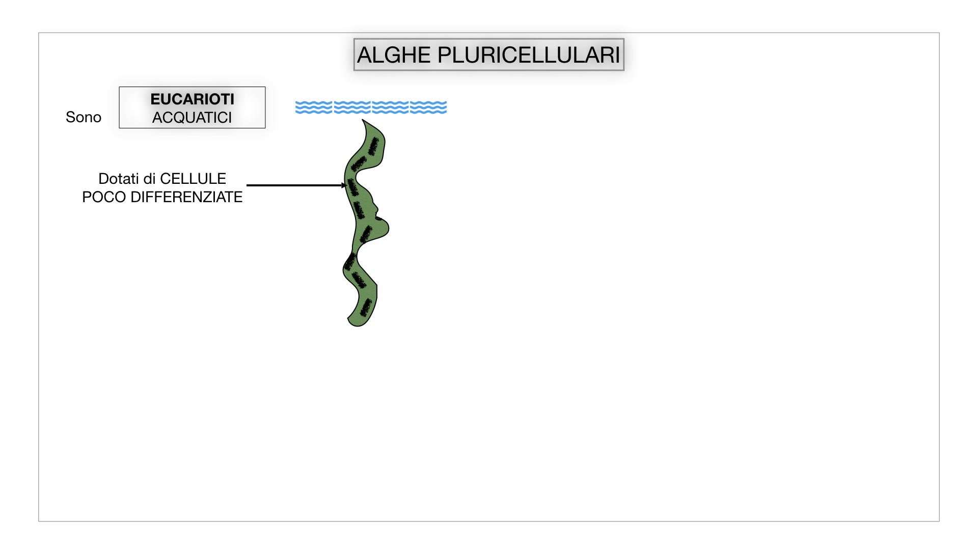 8. alghe uni_pluri_cellulari_SIMULAZIONE.025