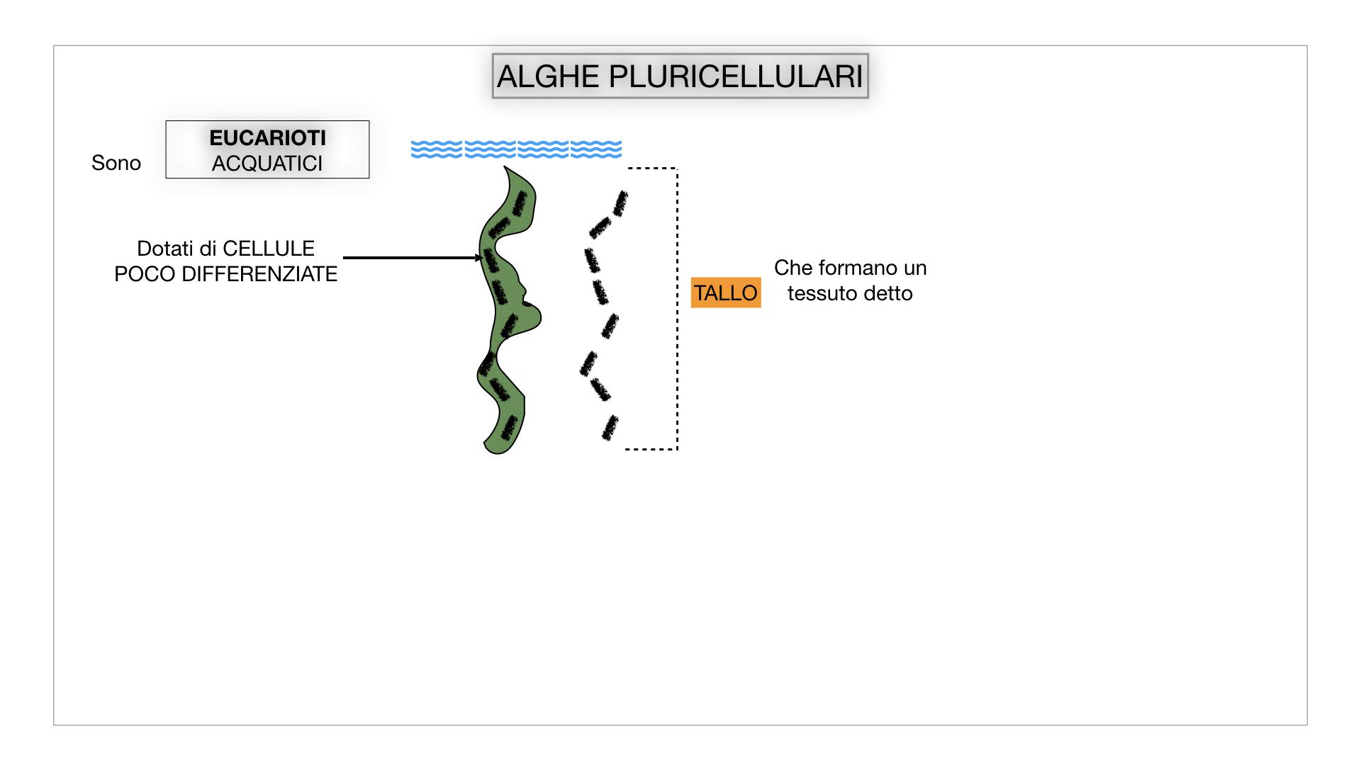8. alghe uni_pluri_cellulari_SIMULAZIONE.026