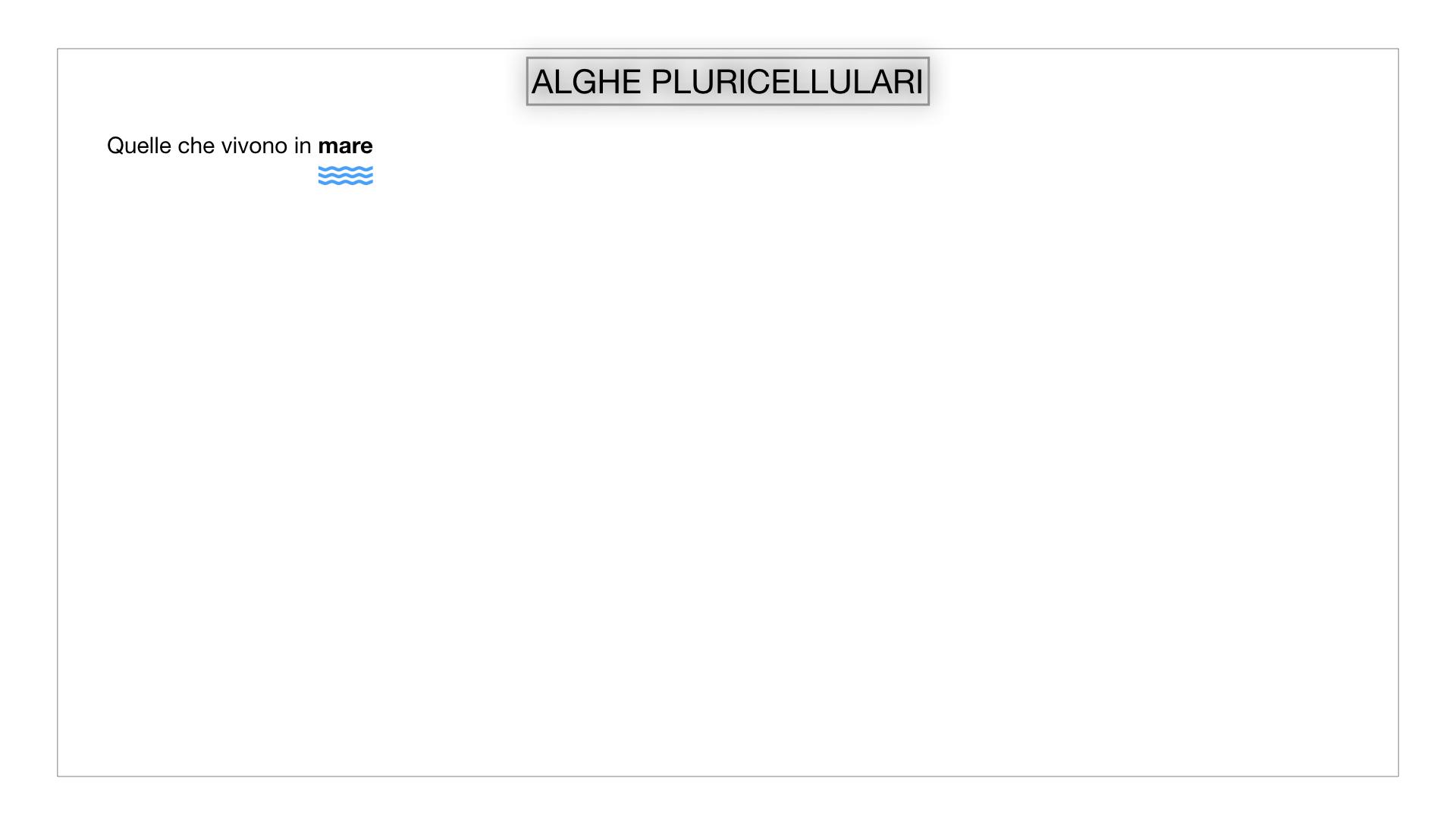 8. alghe uni_pluri_cellulari_SIMULAZIONE.031