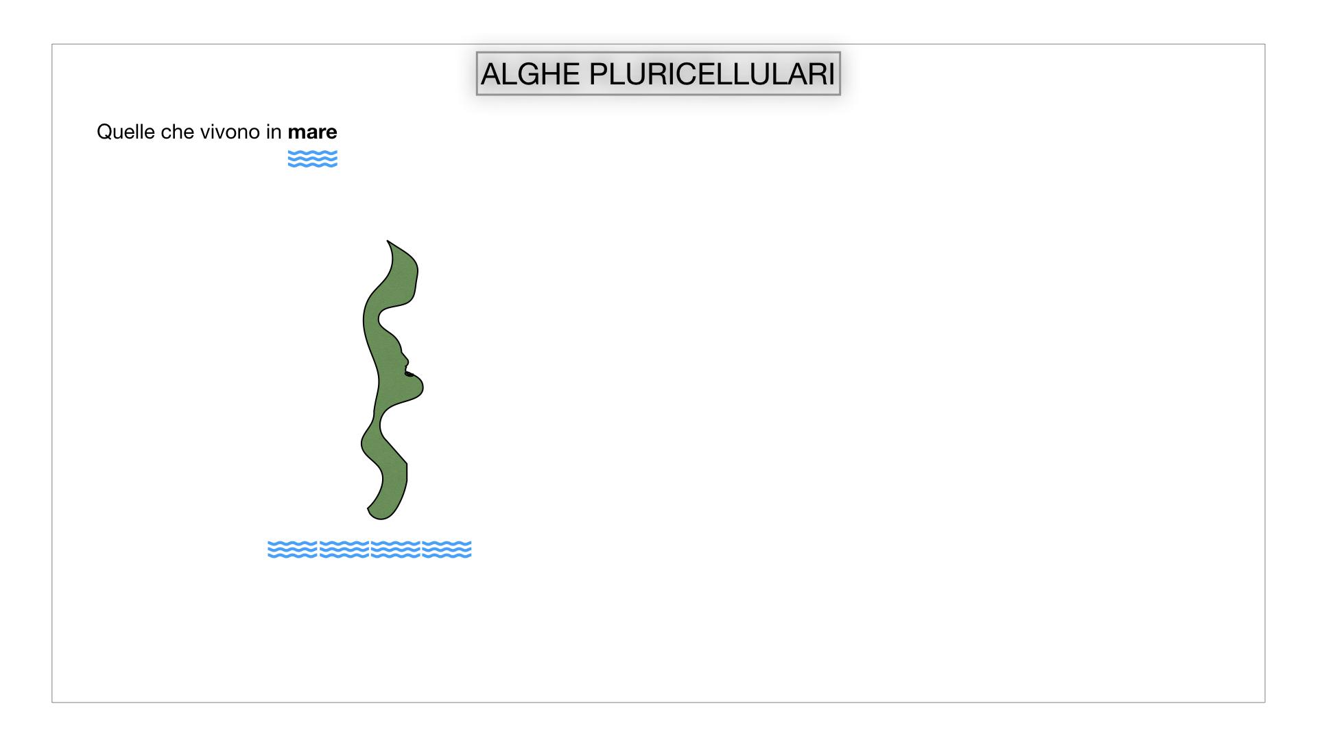 8. alghe uni_pluri_cellulari_SIMULAZIONE.032