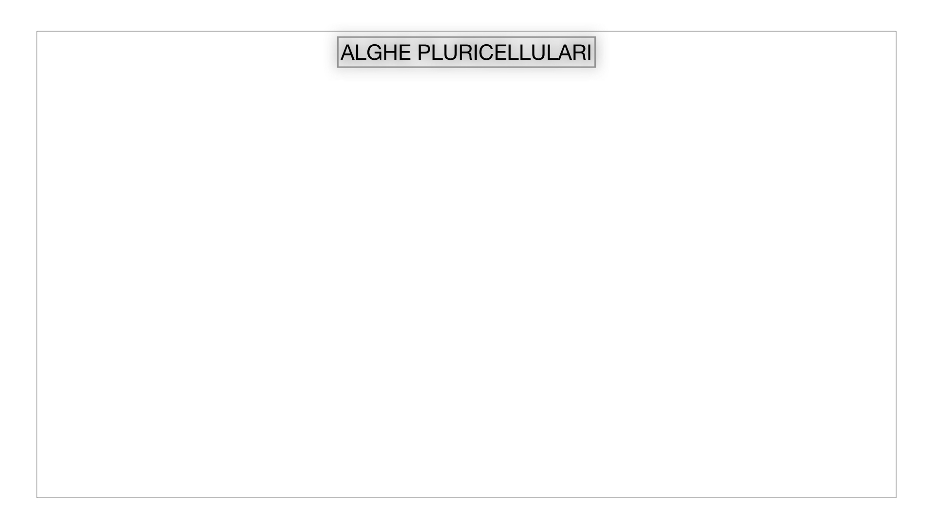 8. alghe uni_pluri_cellulari_SIMULAZIONE.042