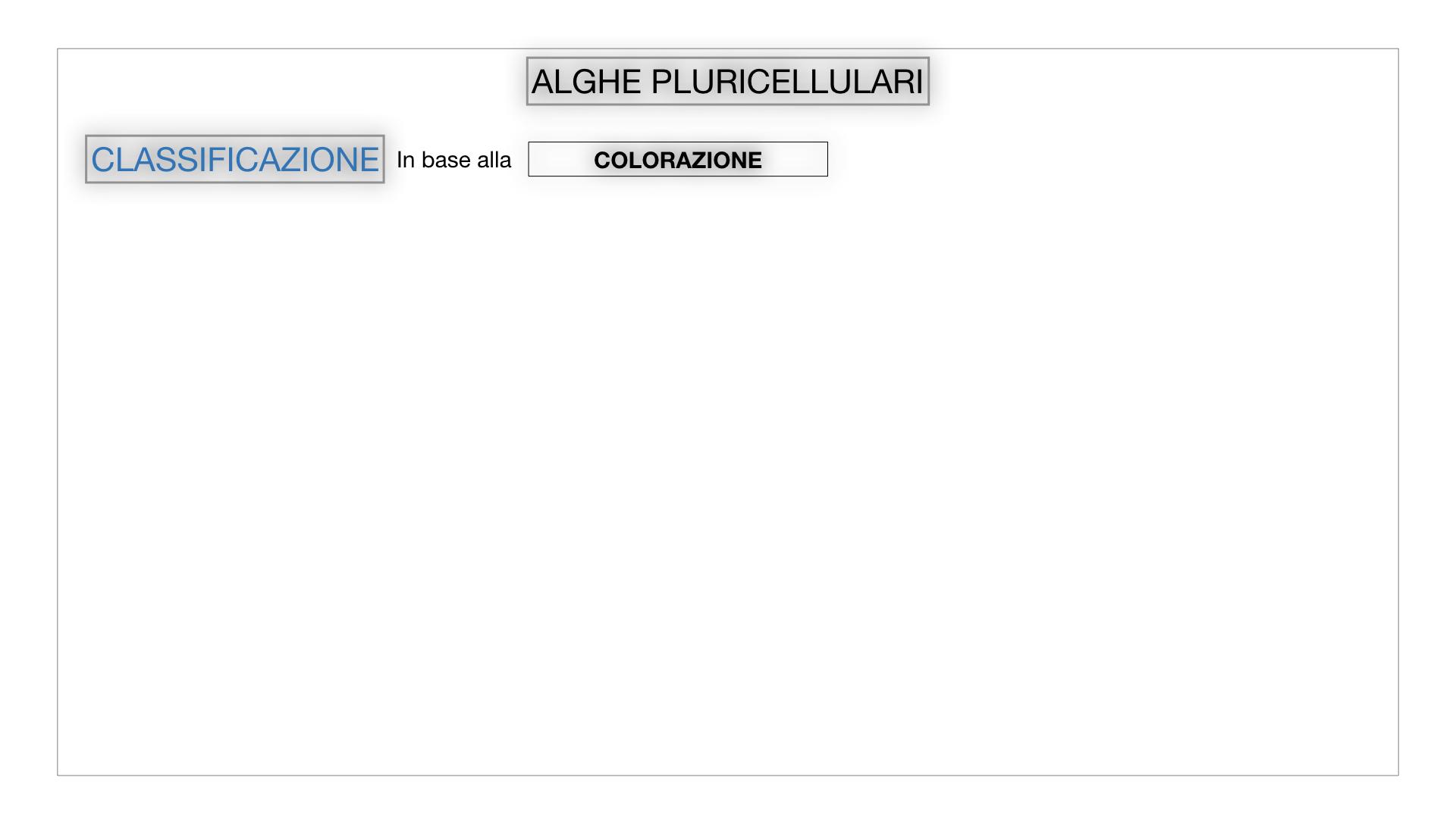 8. alghe uni_pluri_cellulari_SIMULAZIONE.043