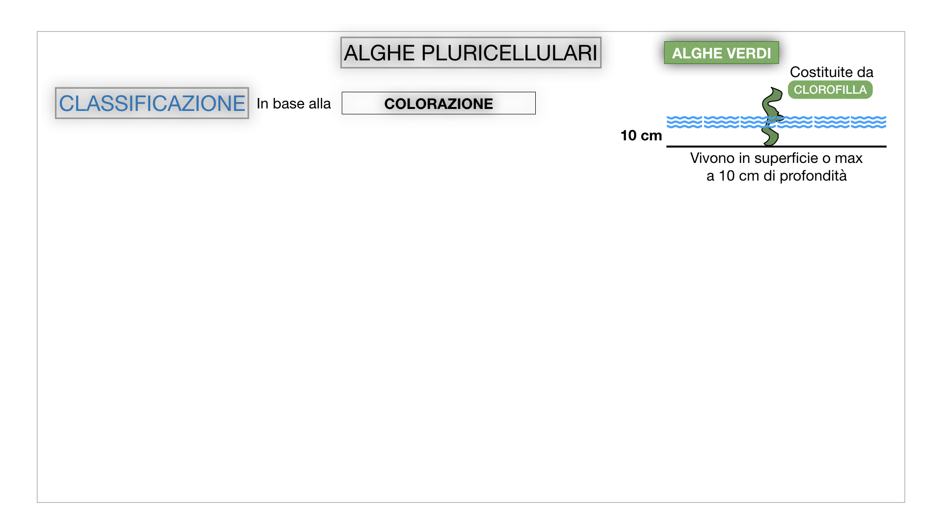 8. alghe uni_pluri_cellulari_SIMULAZIONE.046