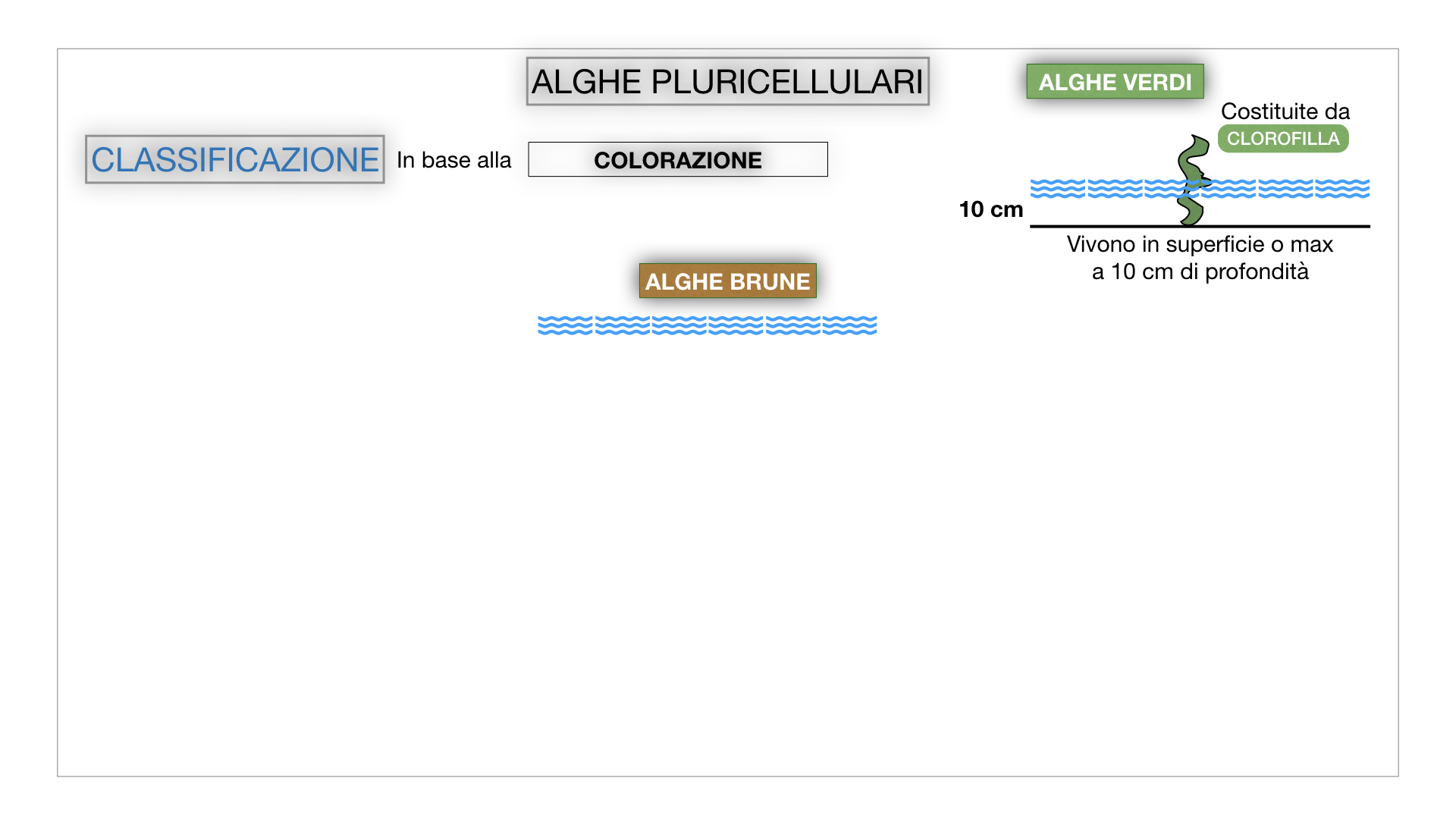 8. alghe uni_pluri_cellulari_SIMULAZIONE.047