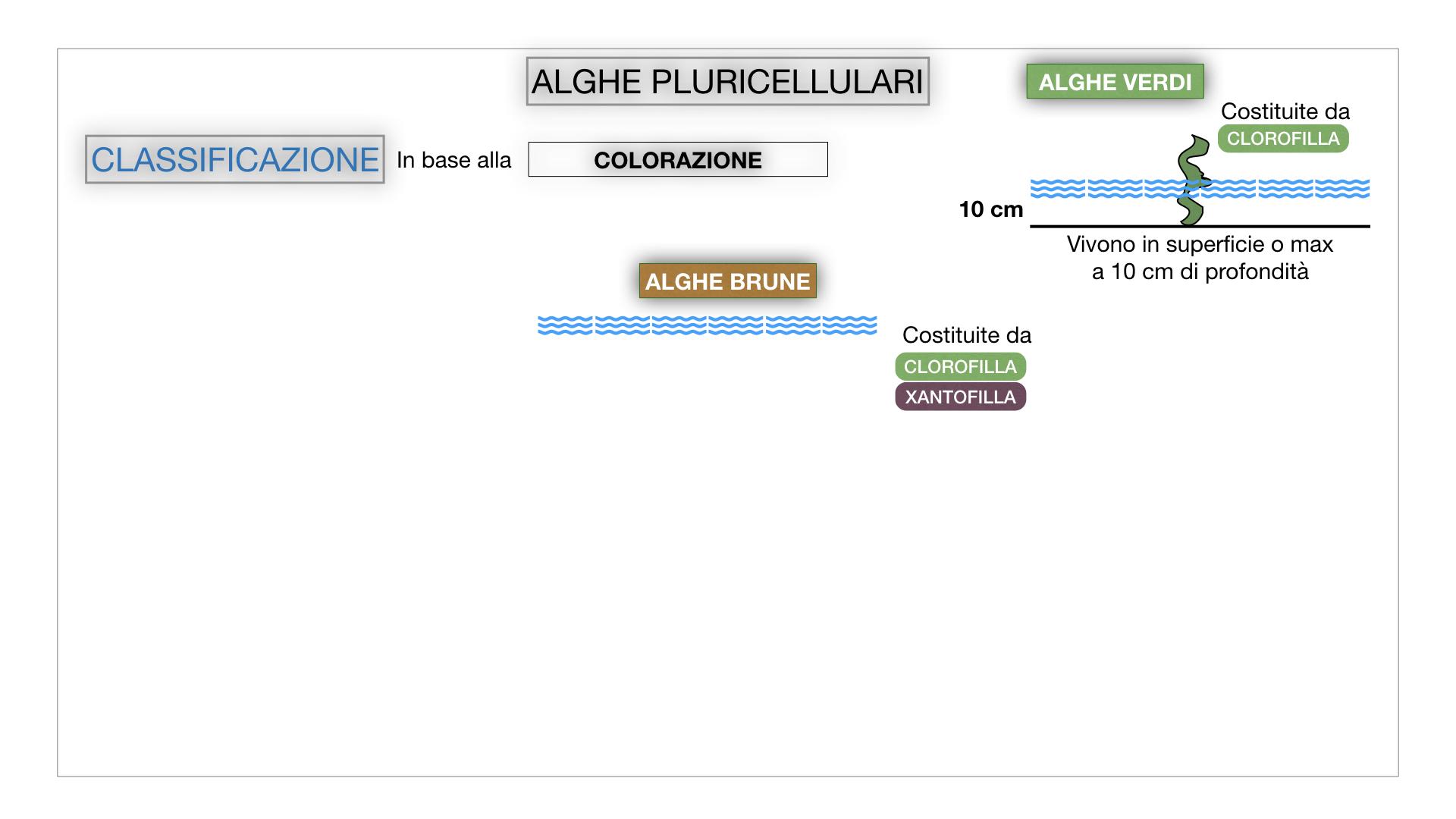 8. alghe uni_pluri_cellulari_SIMULAZIONE.048