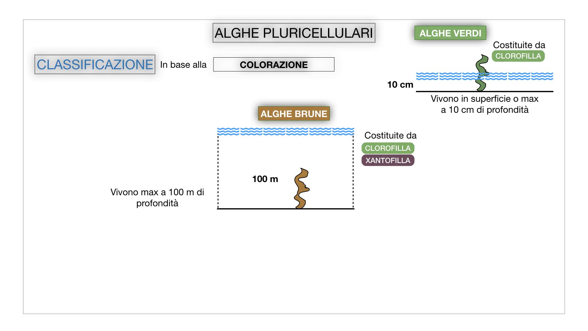 8. alghe uni_pluri_cellulari_SIMULAZIONE.049