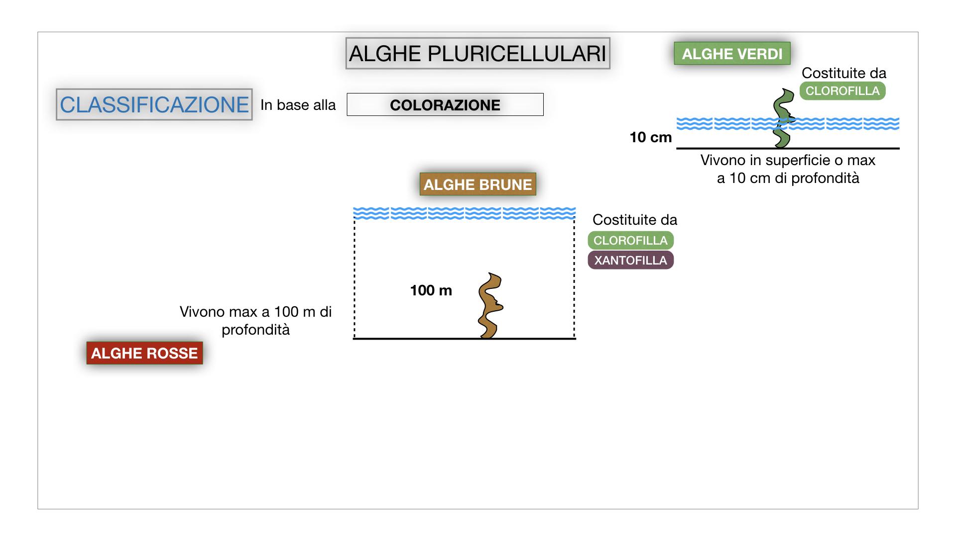 8. alghe uni_pluri_cellulari_SIMULAZIONE.050