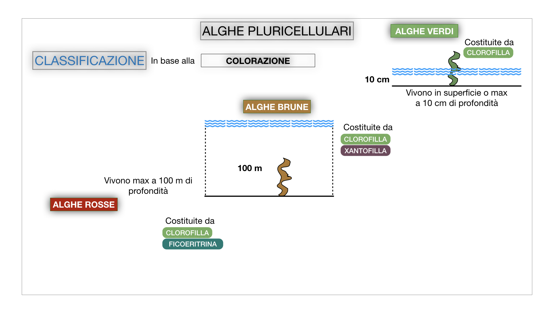 8. alghe uni_pluri_cellulari_SIMULAZIONE.051