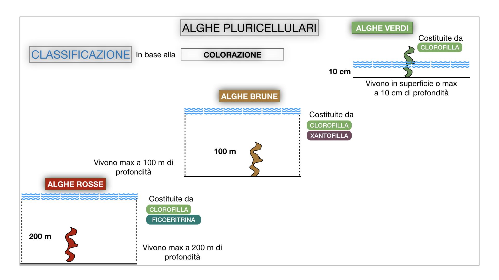 8. alghe uni_pluri_cellulari_SIMULAZIONE.052