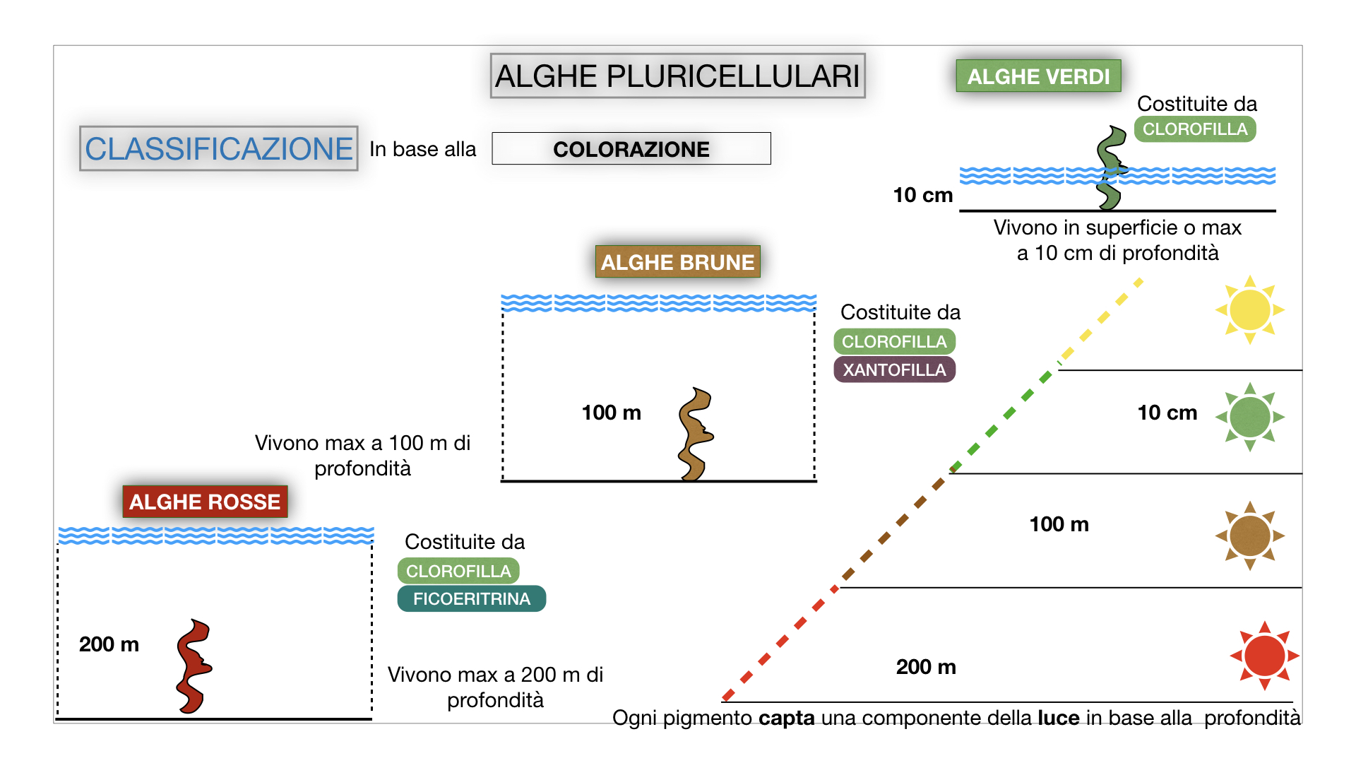 8. alghe uni_pluri_cellulari_SIMULAZIONE.056