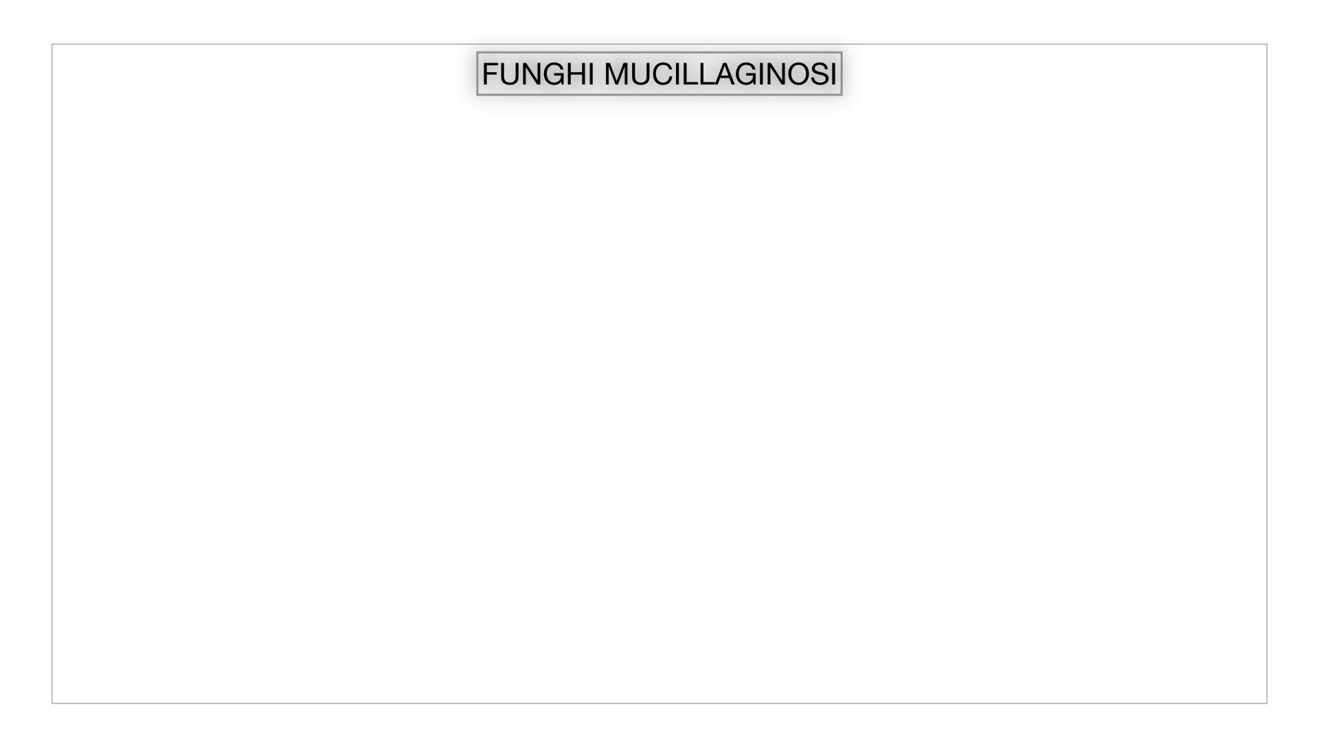 8. alghe uni_pluri_cellulari_SIMULAZIONE.057