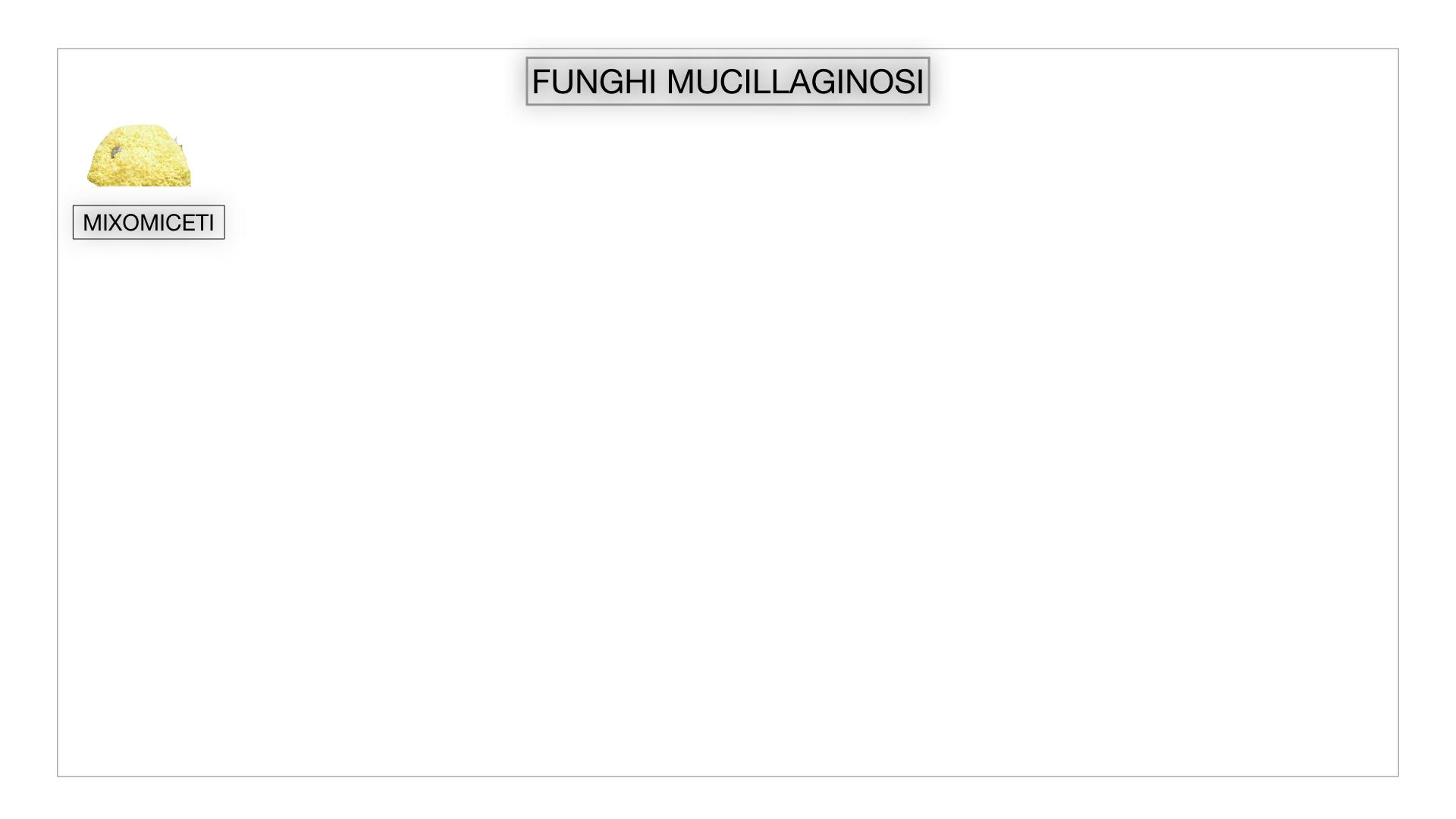 8. alghe uni_pluri_cellulari_SIMULAZIONE.058