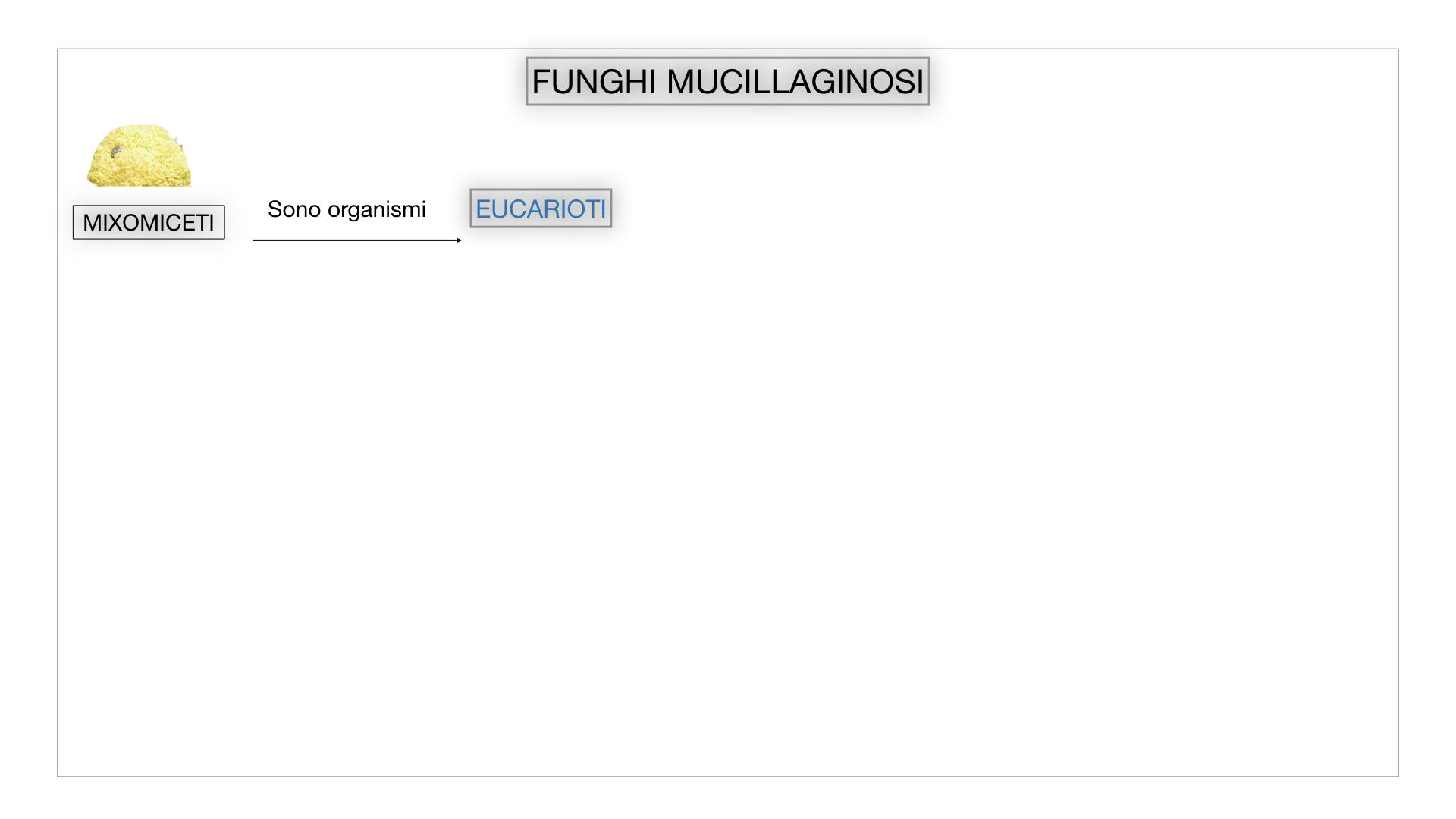 8. alghe uni_pluri_cellulari_SIMULAZIONE.059