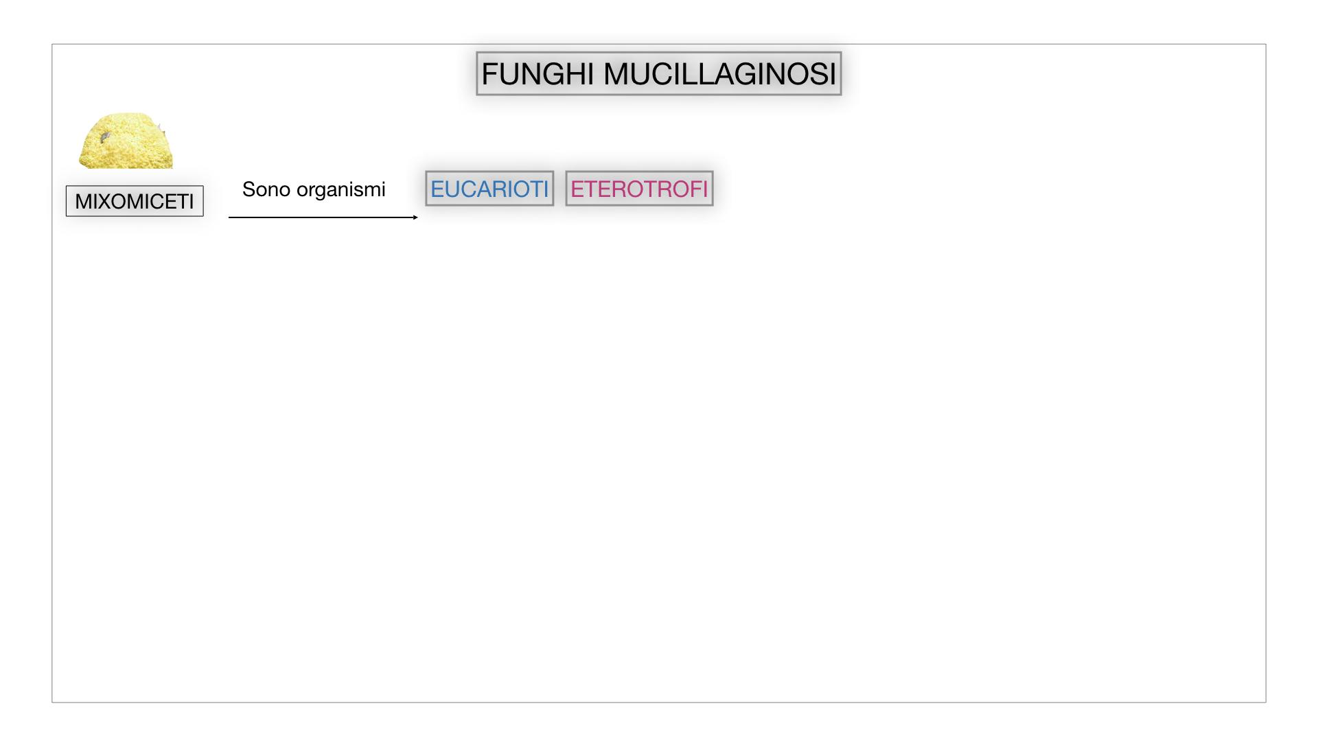 8. alghe uni_pluri_cellulari_SIMULAZIONE.060