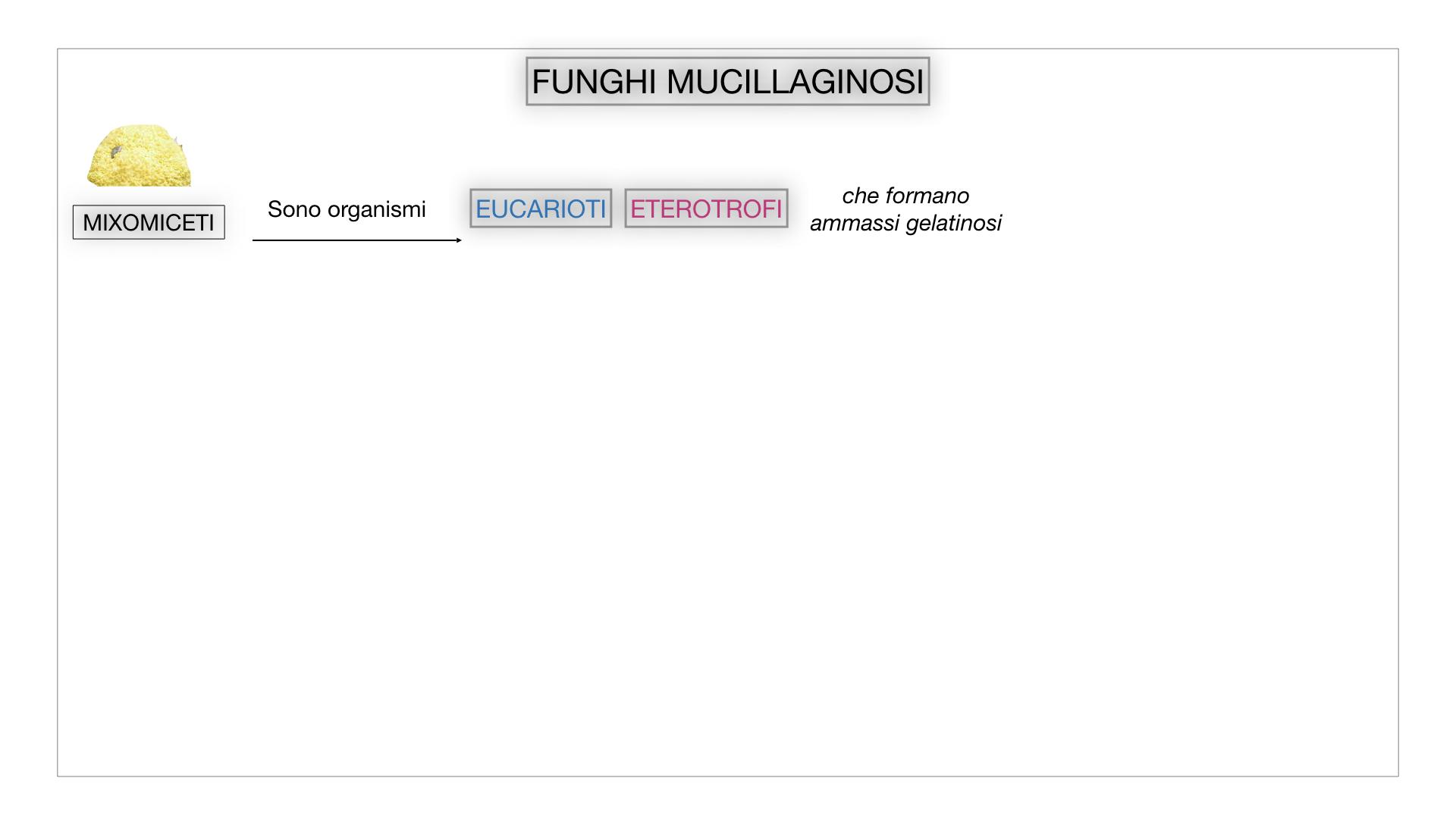 8. alghe uni_pluri_cellulari_SIMULAZIONE.061