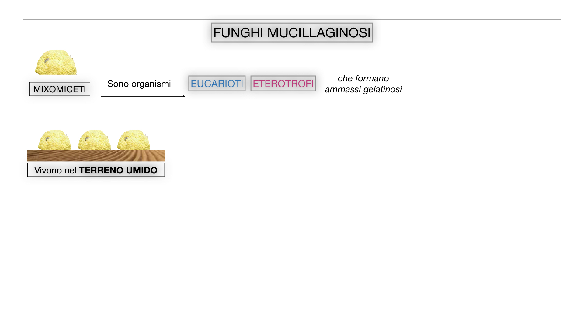 8. alghe uni_pluri_cellulari_SIMULAZIONE.062