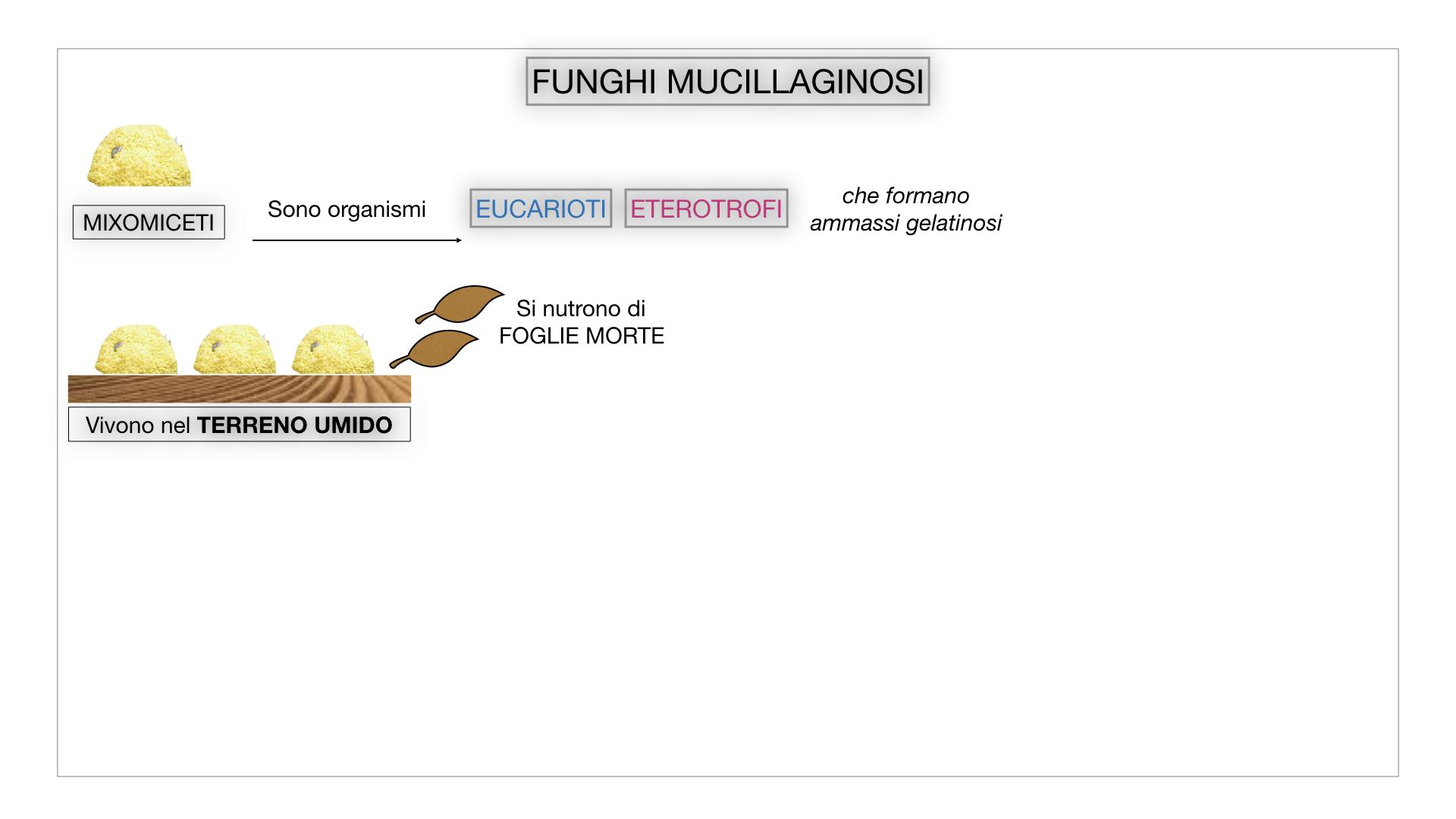 8. alghe uni_pluri_cellulari_SIMULAZIONE.063