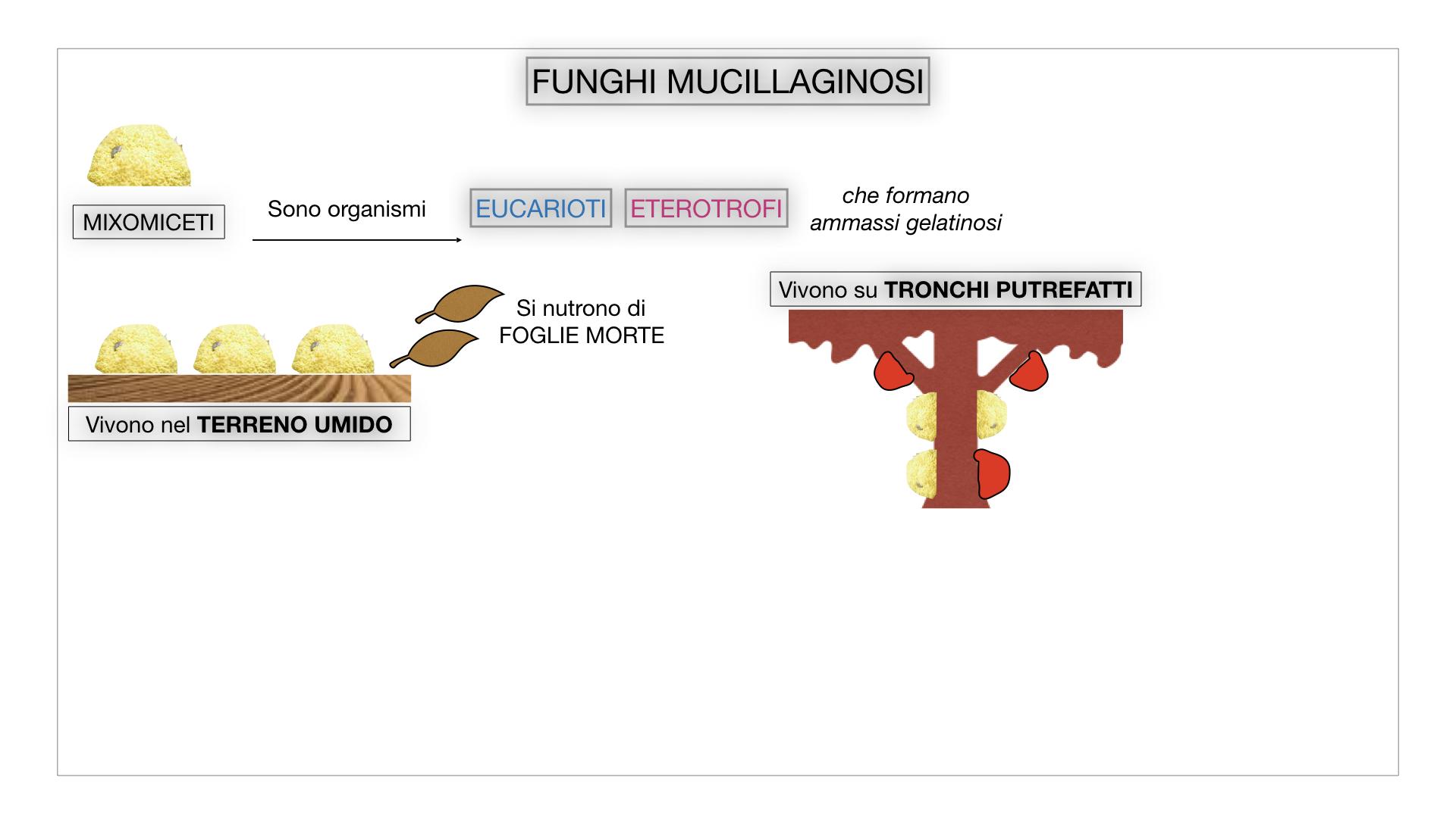 8. alghe uni_pluri_cellulari_SIMULAZIONE.064