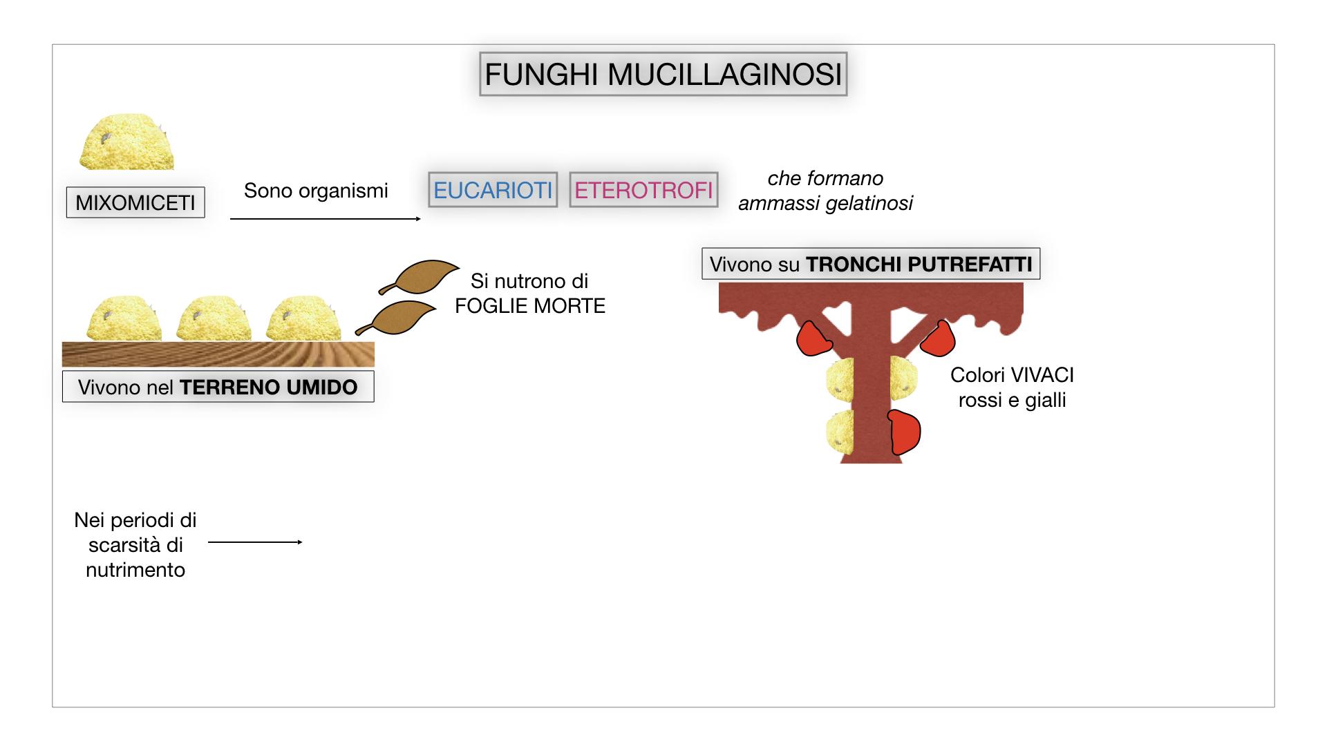 8. alghe uni_pluri_cellulari_SIMULAZIONE.066