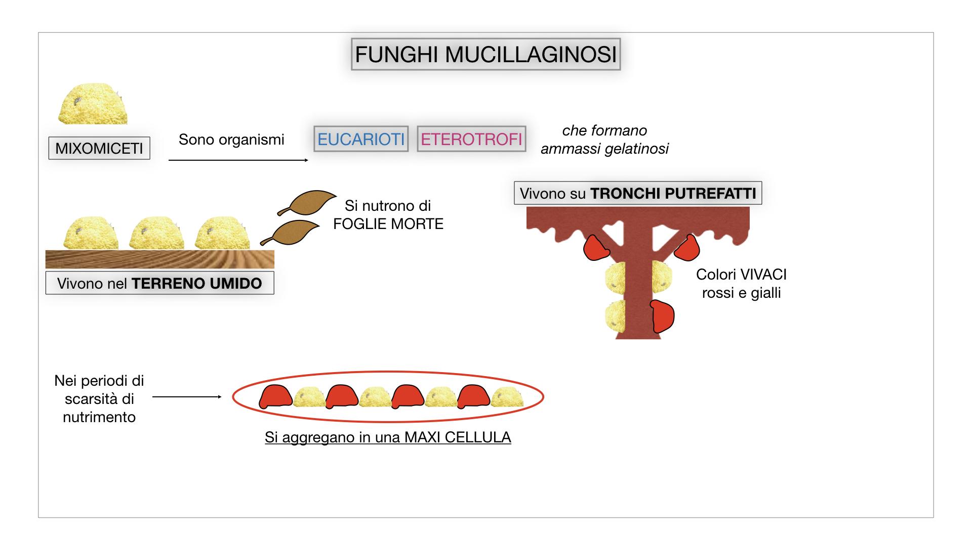 8. alghe uni_pluri_cellulari_SIMULAZIONE.067