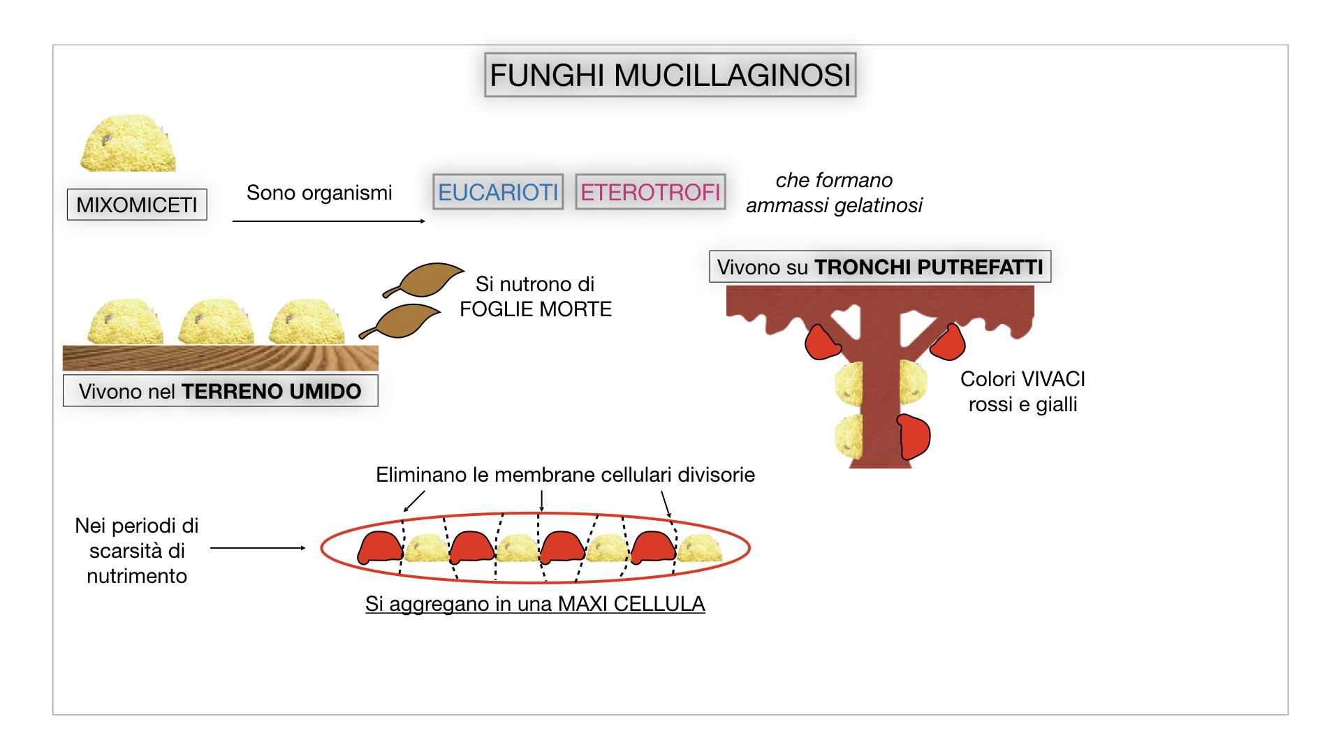 8. alghe uni_pluri_cellulari_SIMULAZIONE.068