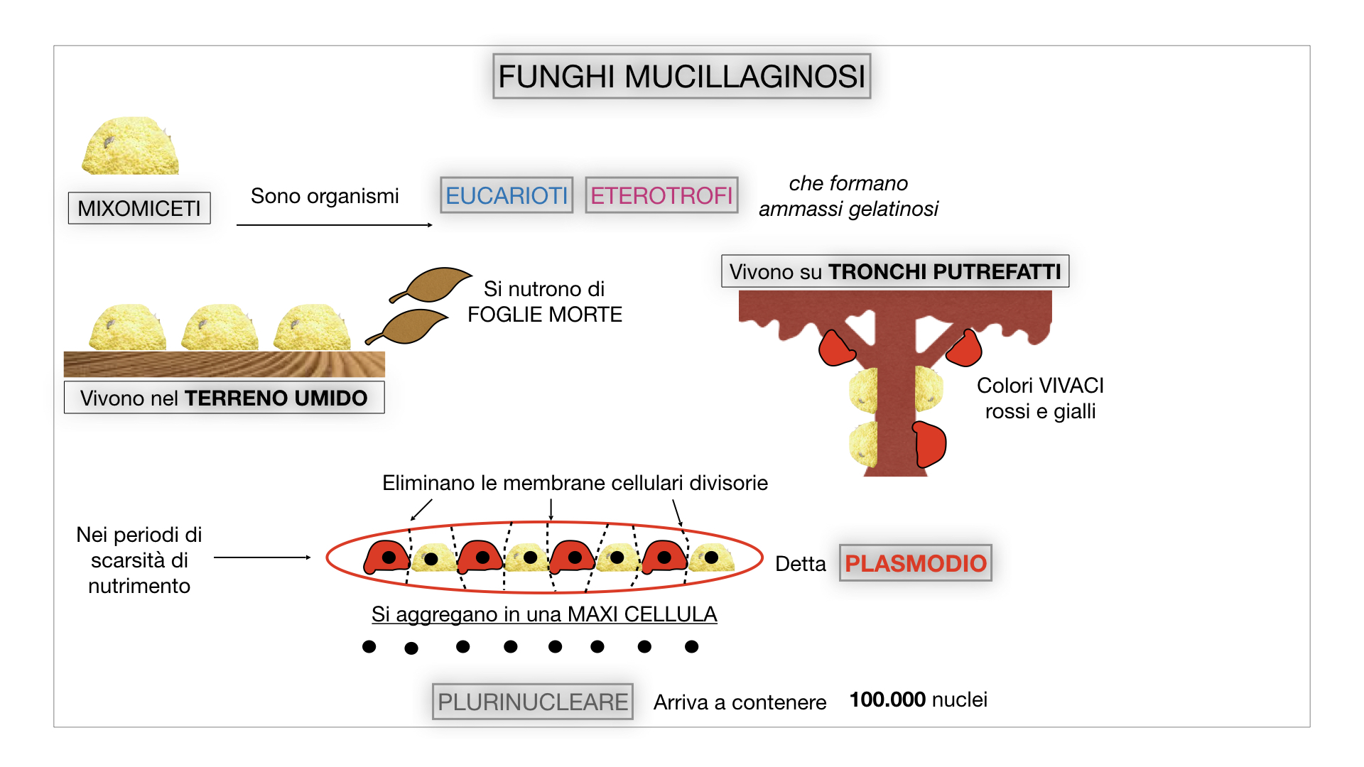 8. alghe uni_pluri_cellulari_SIMULAZIONE.070