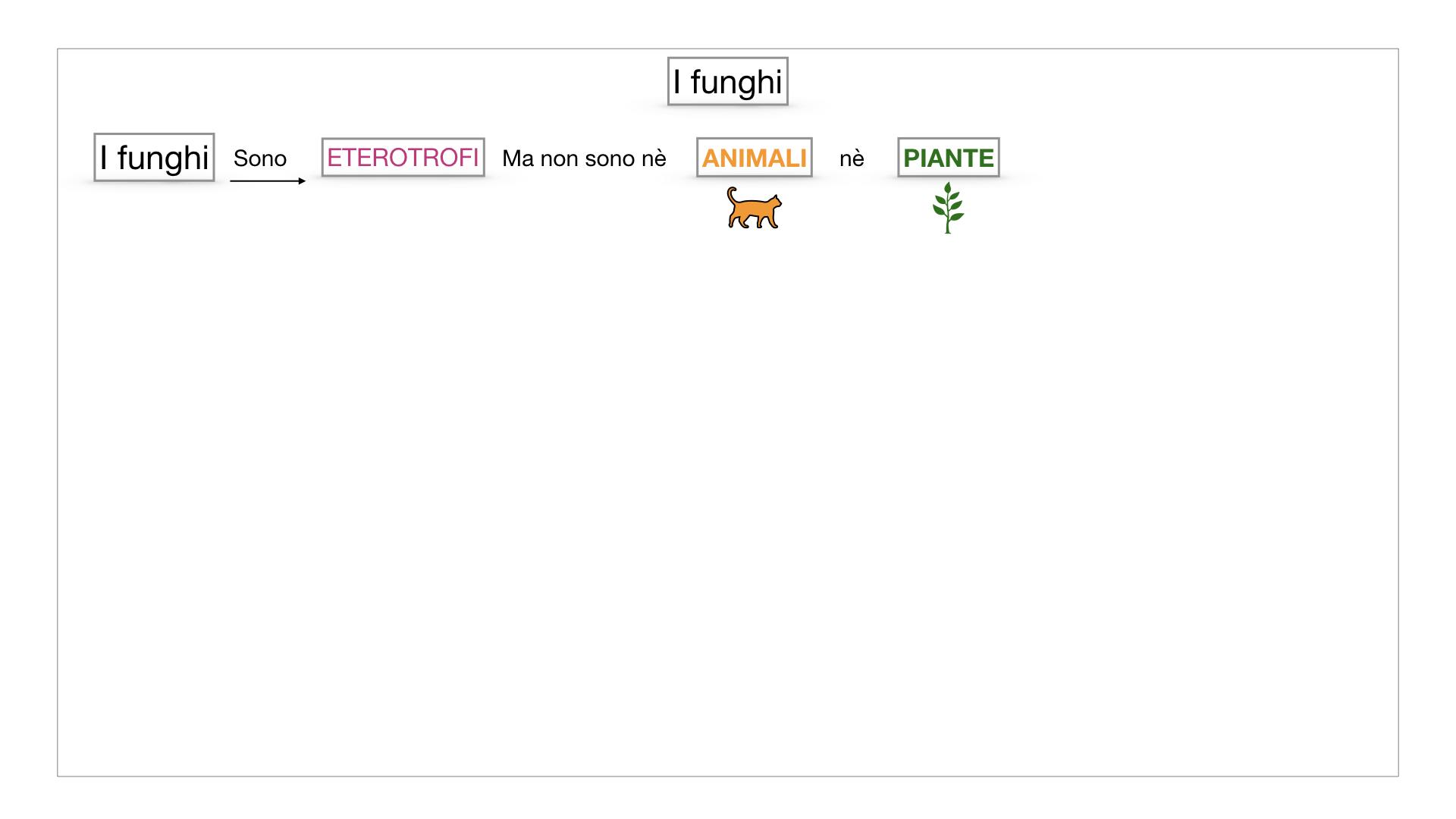 9. i funghi_SIMULAZIONE PARTE1.005