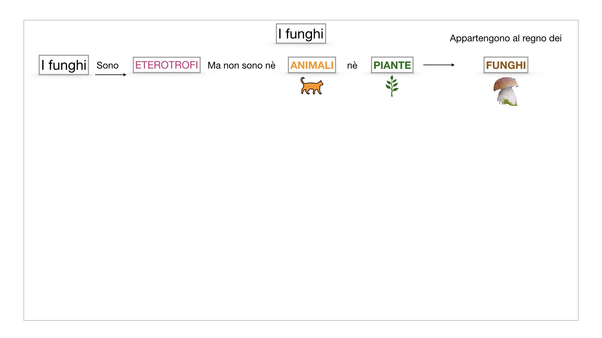 9. i funghi_SIMULAZIONE PARTE1.006