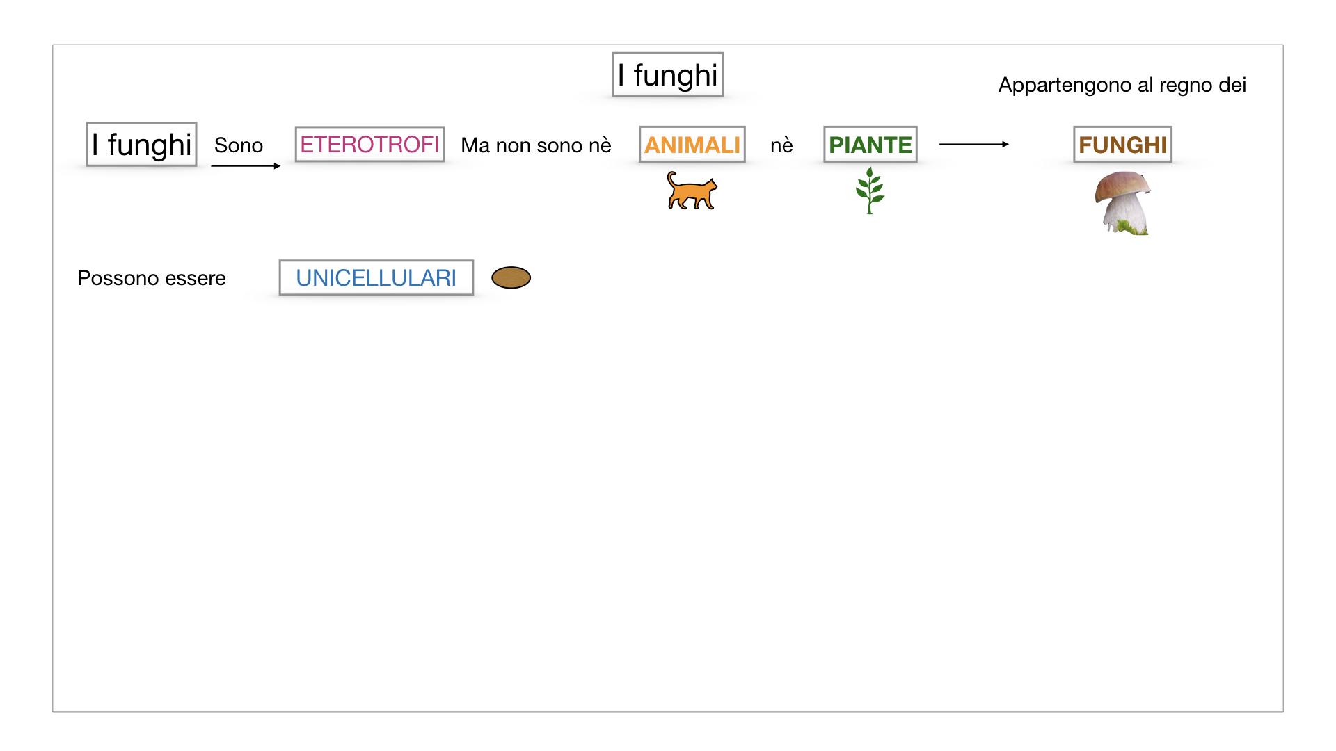 9. i funghi_SIMULAZIONE PARTE1.007