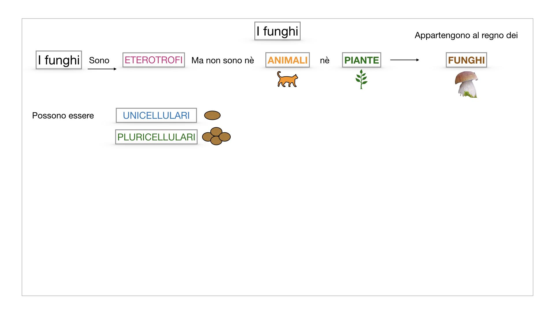 9. i funghi_SIMULAZIONE PARTE1.008