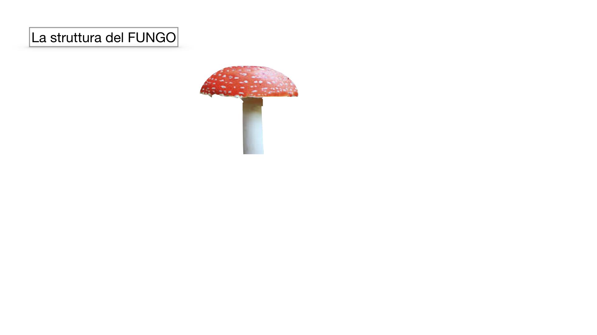9. i funghi_SIMULAZIONE PARTE1.025