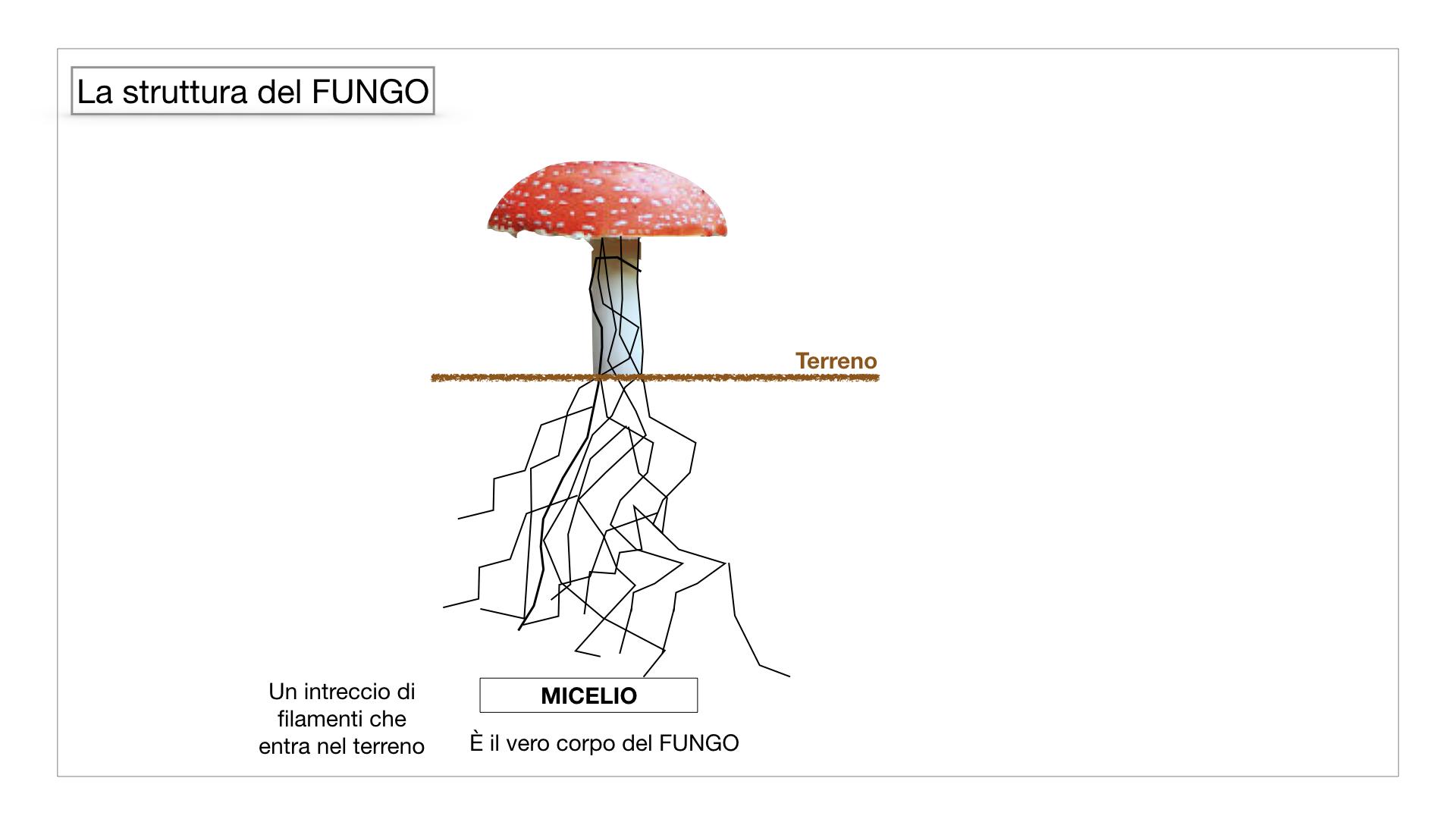 9. i funghi_SIMULAZIONE PARTE1.027