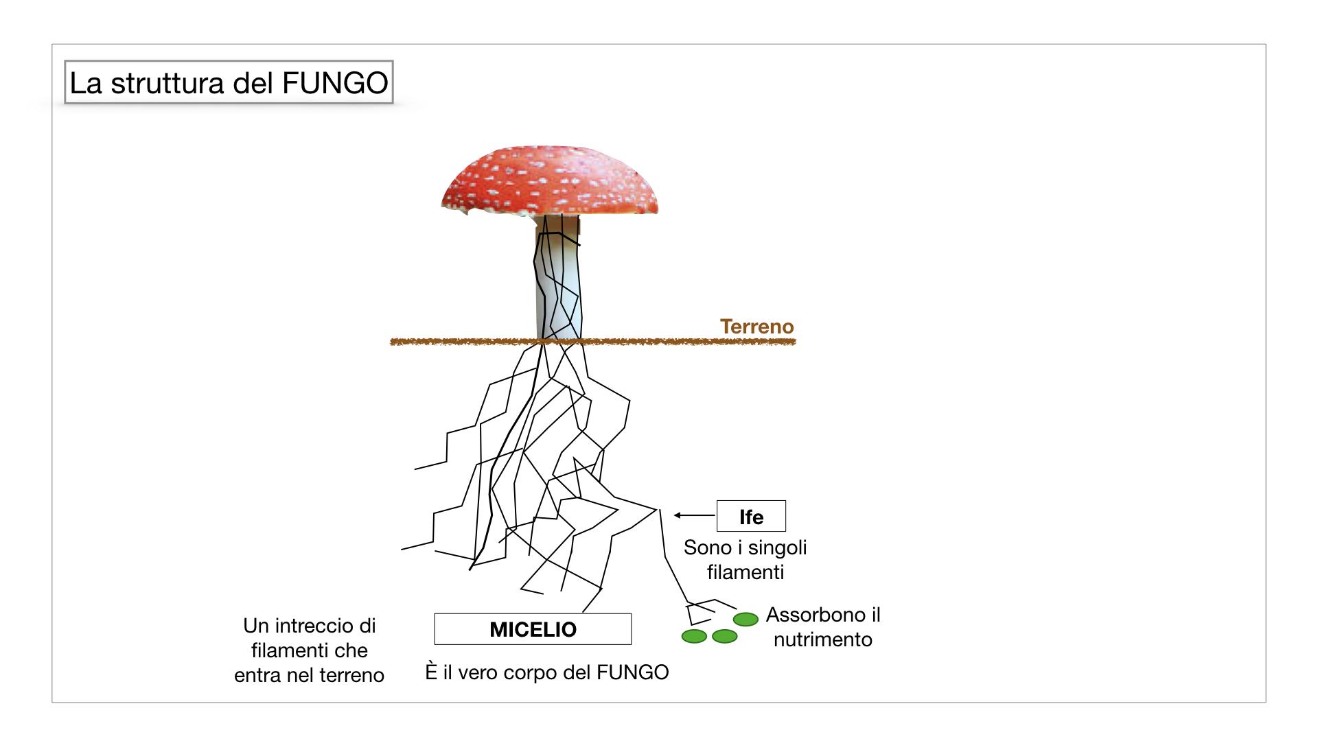 9. i funghi_SIMULAZIONE PARTE1.029